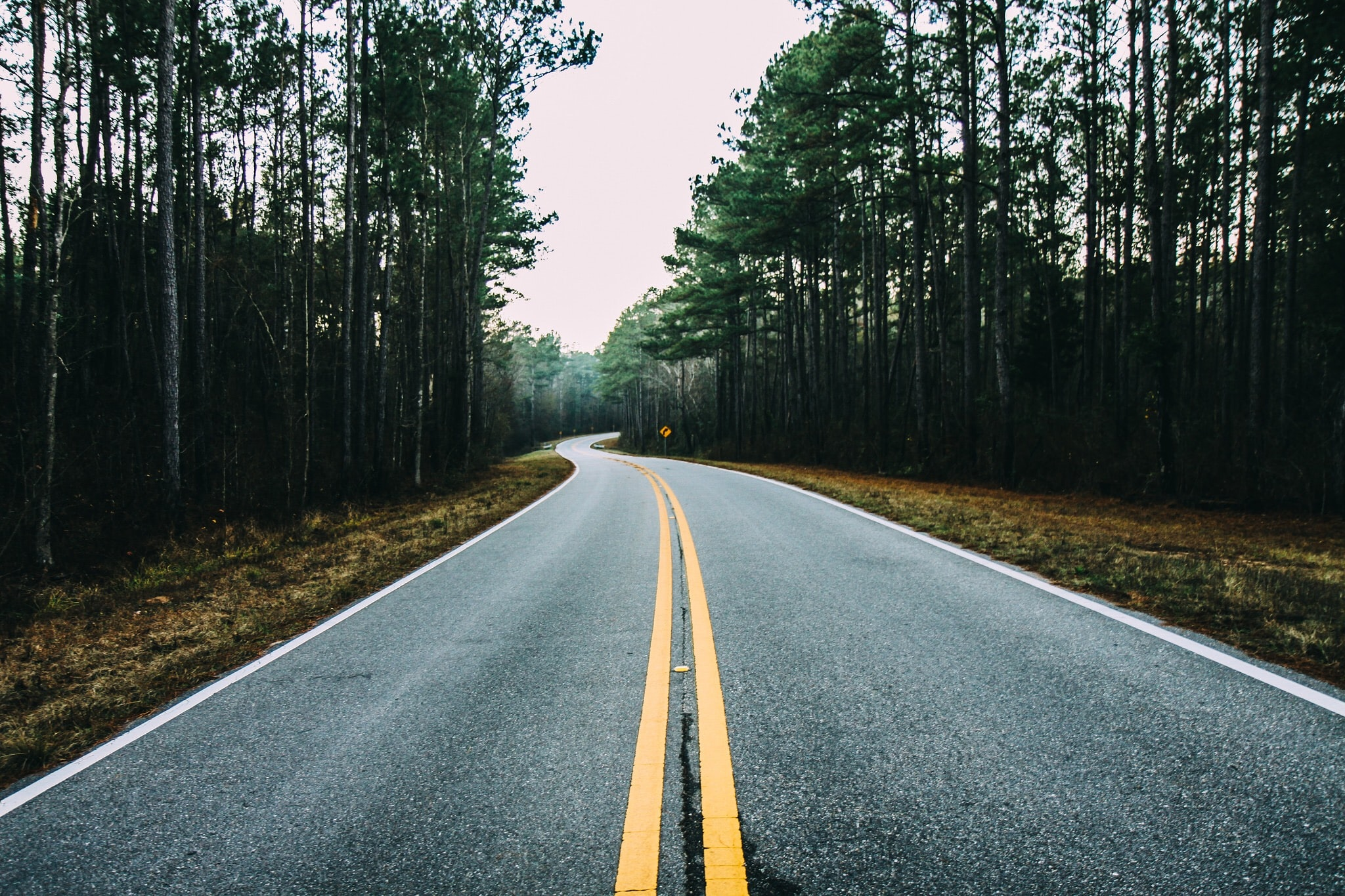 A moody winding forest road