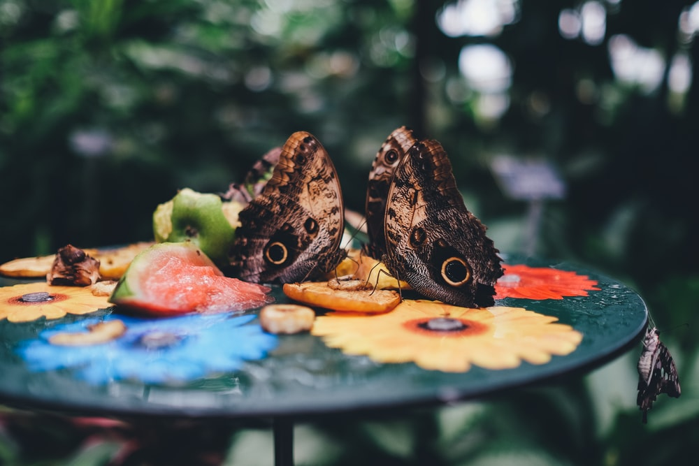 selective focus photography of two butterflies on tabletop