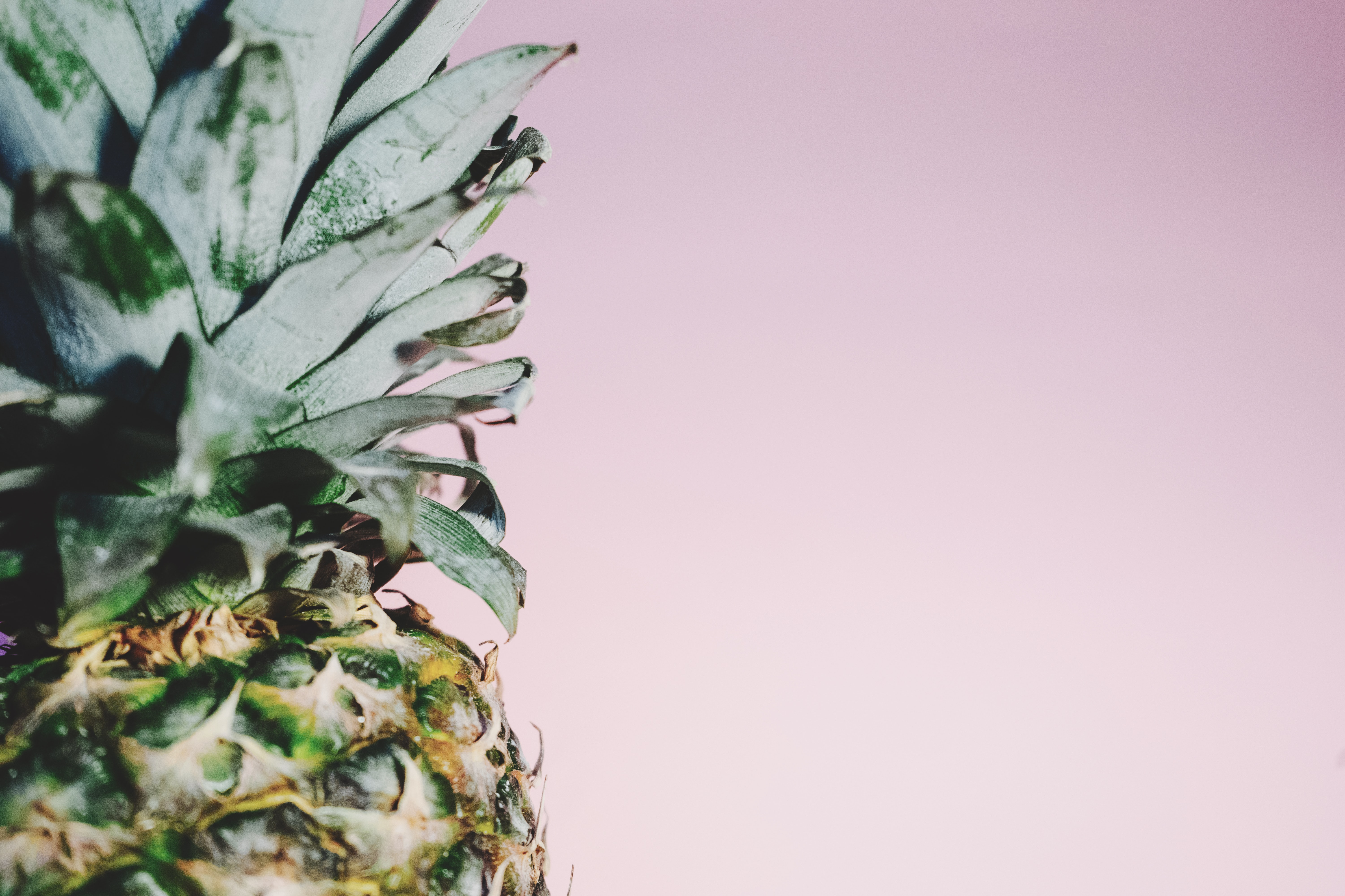 Spines and green top of a fresh pineapple on a pink background