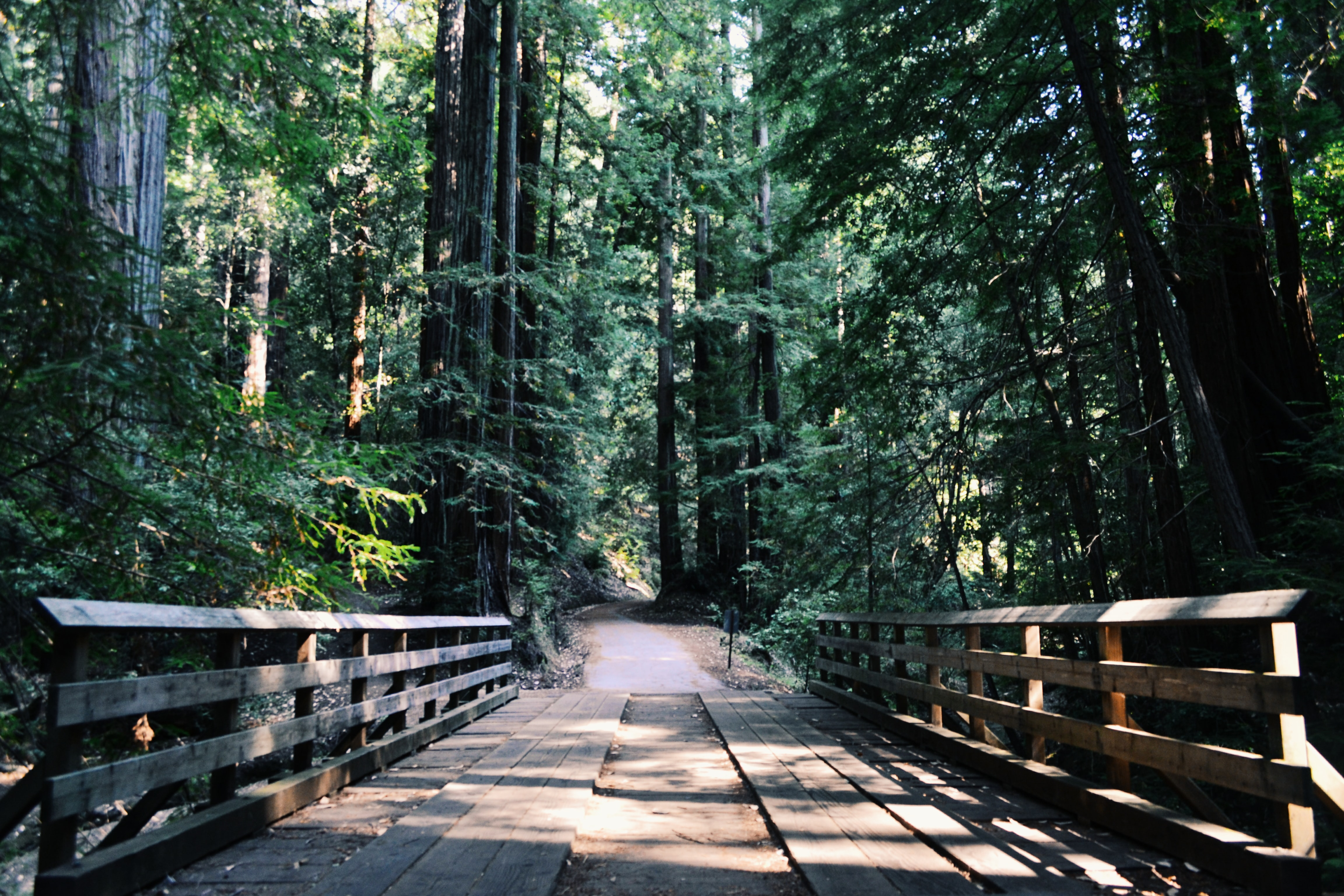 A wooden bridge and a narrow asphalt path in a forest