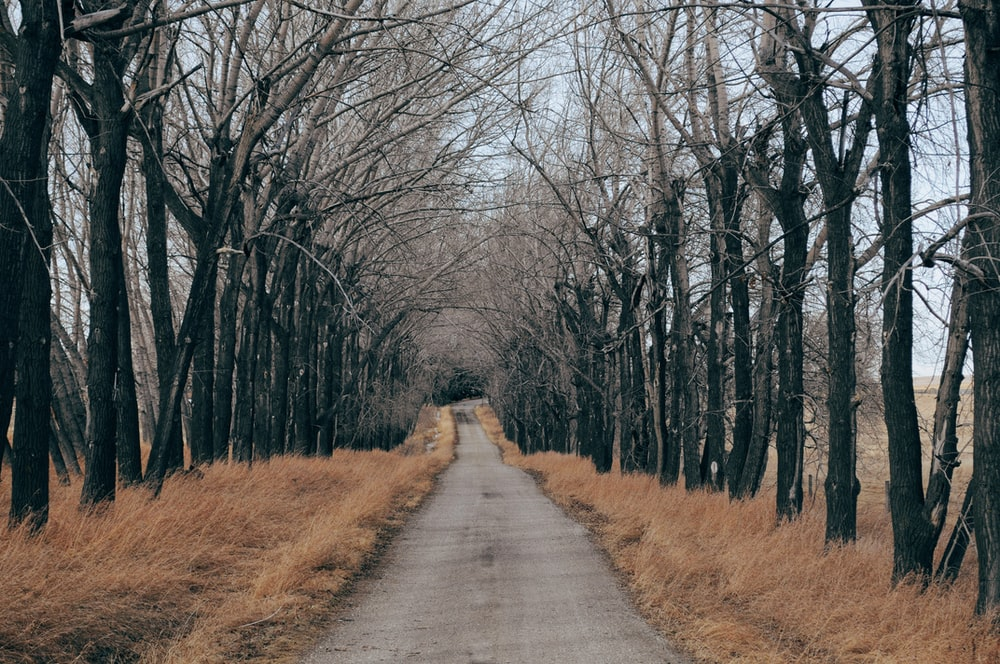 concrete road beside tree