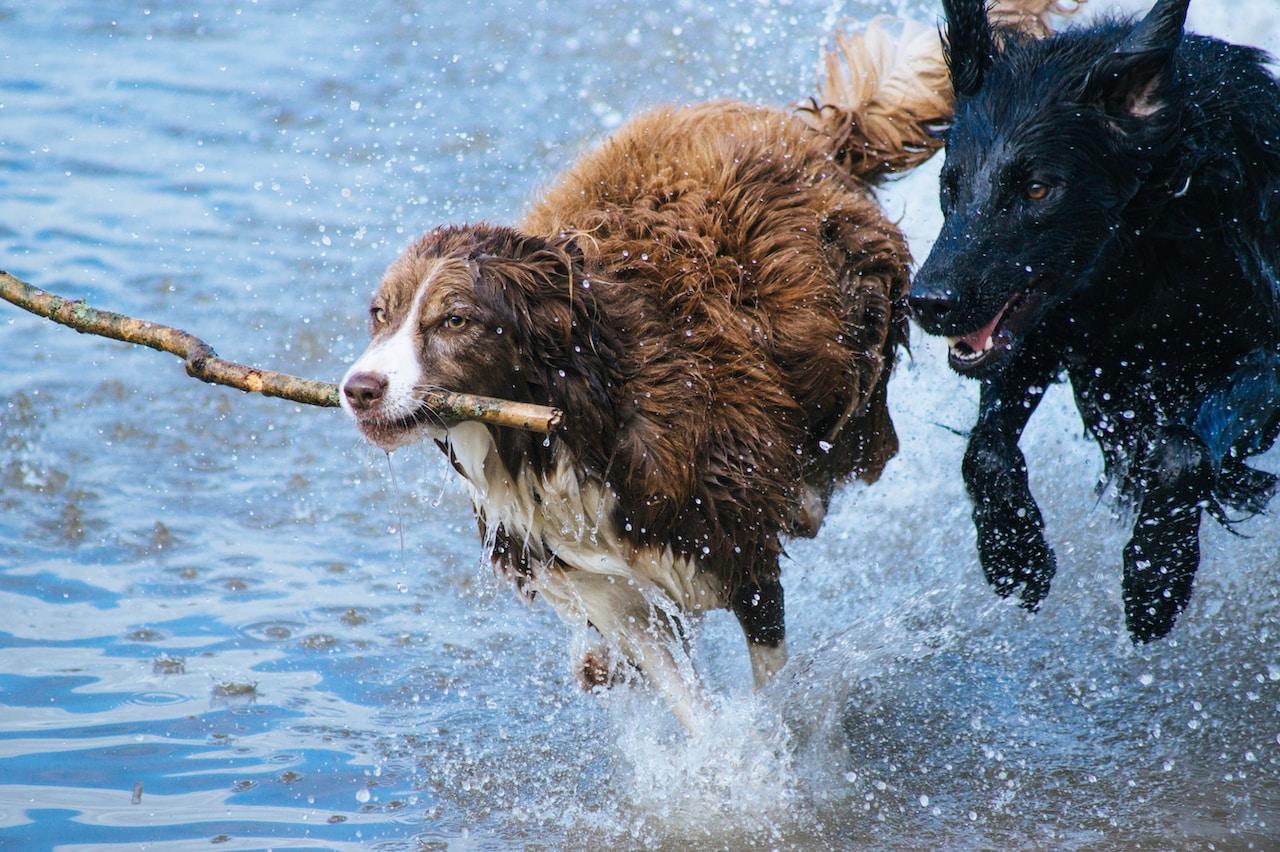 spielerisch lernen mit hund