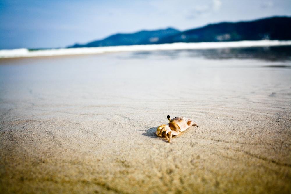 brown crab on beach during daytime