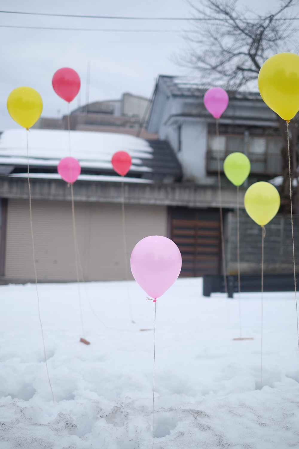 Colorful balloons are placed standing on the snow in Tokamachi.