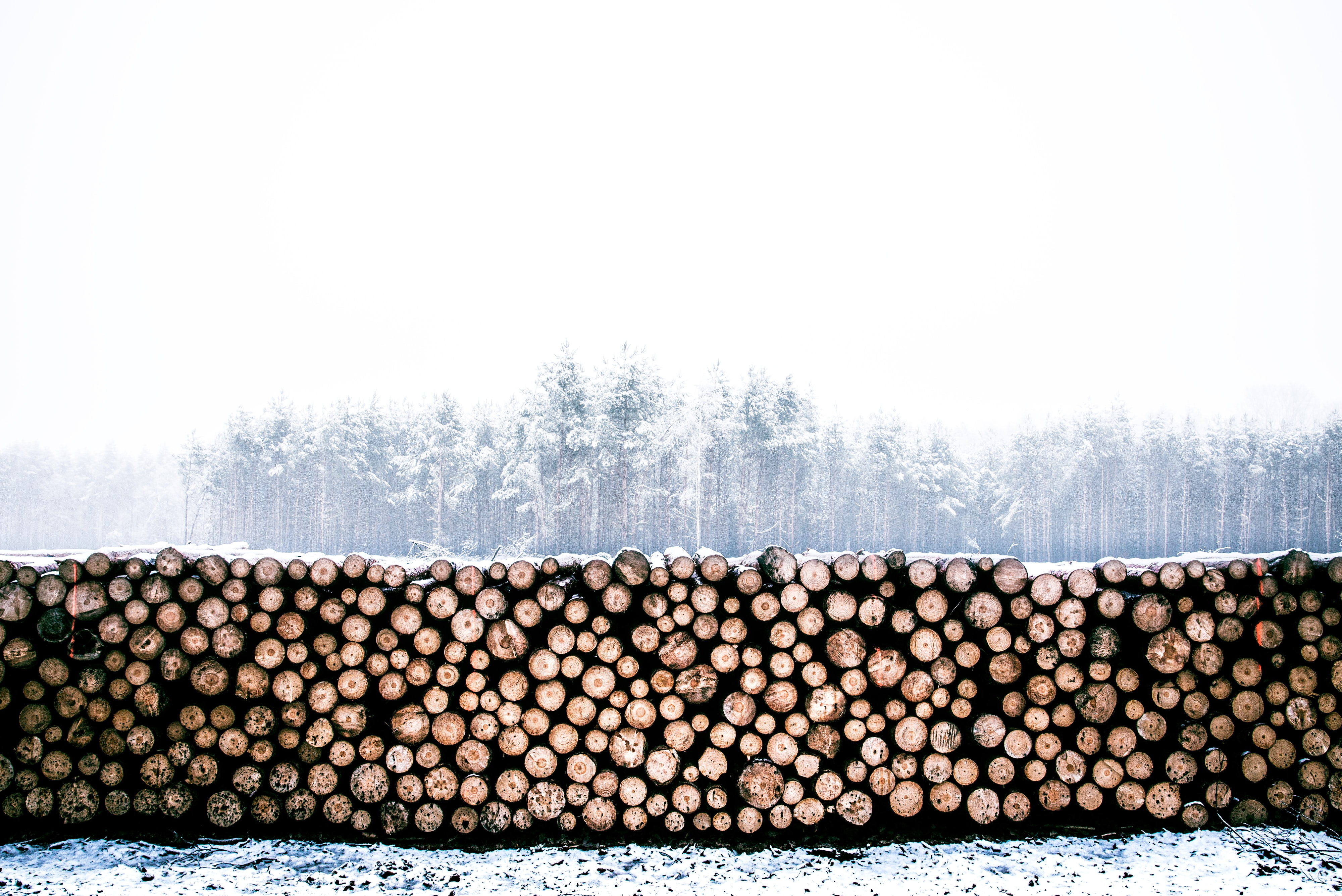 A stack of wood lays in front of a snowy and foggy forest