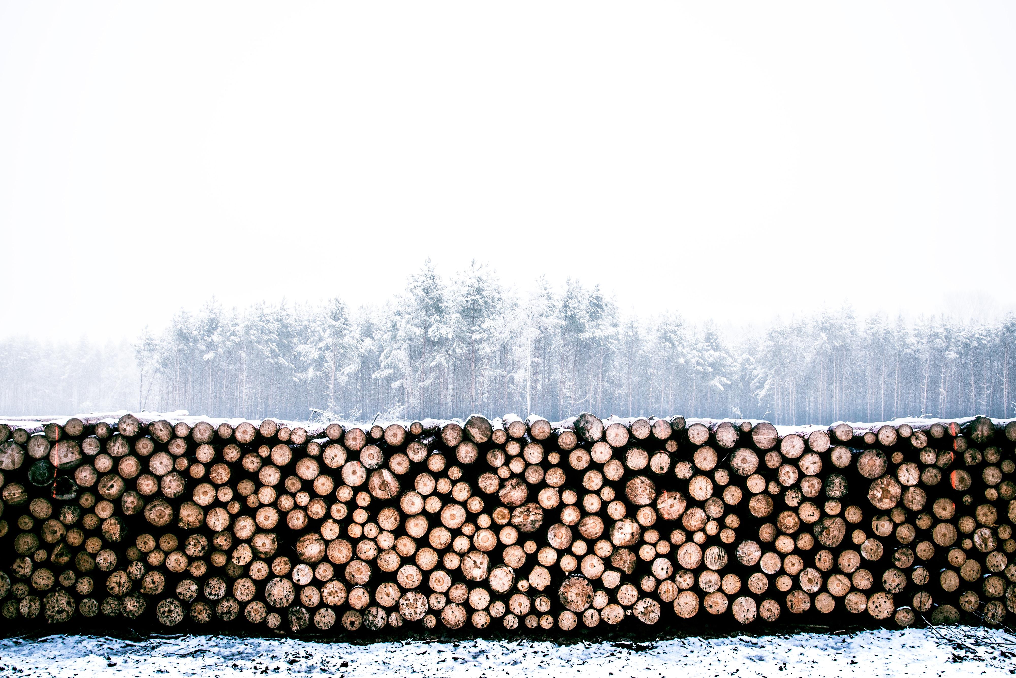 firewood lot