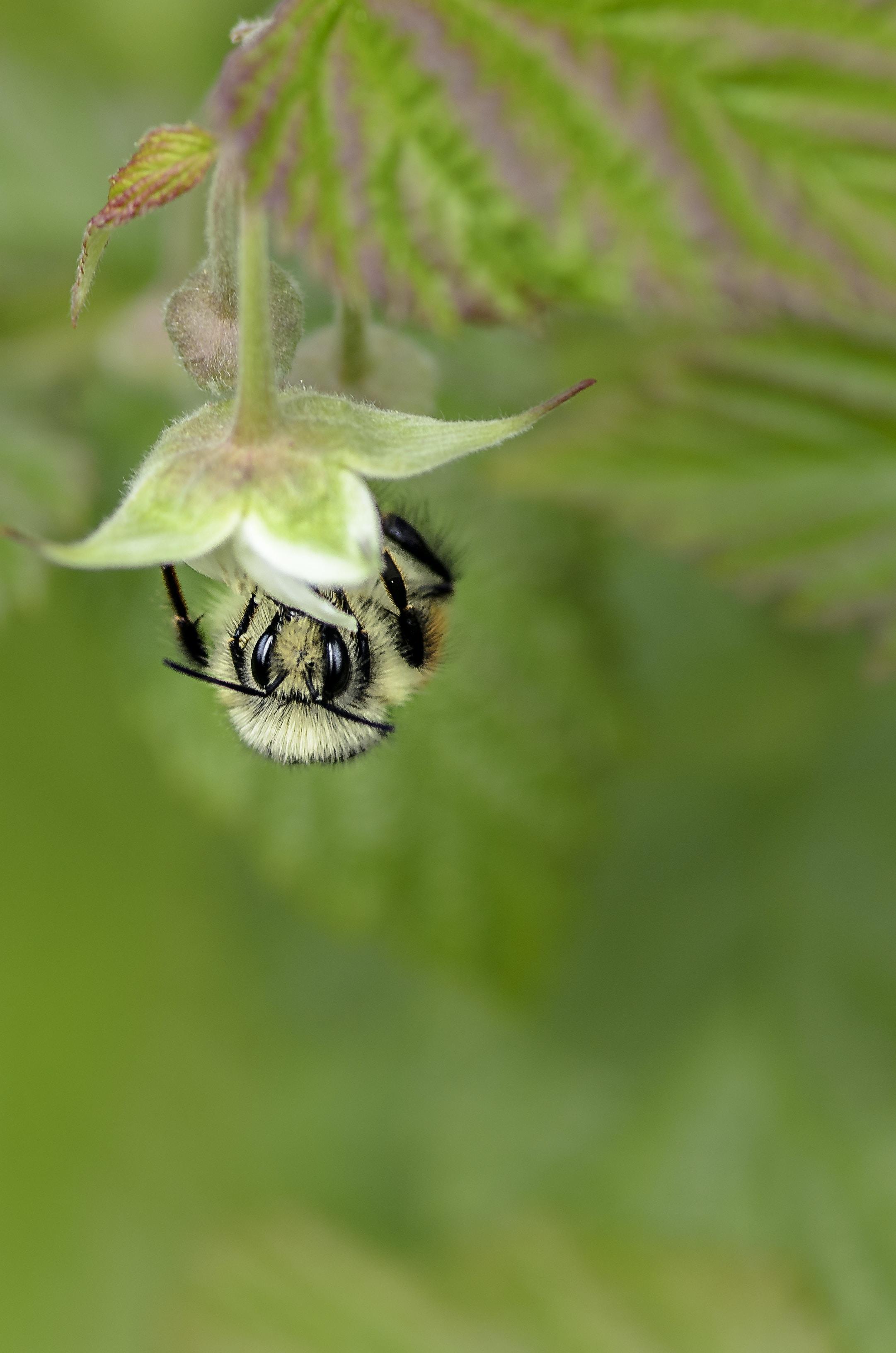 tilt shift lens photo of bee on flower