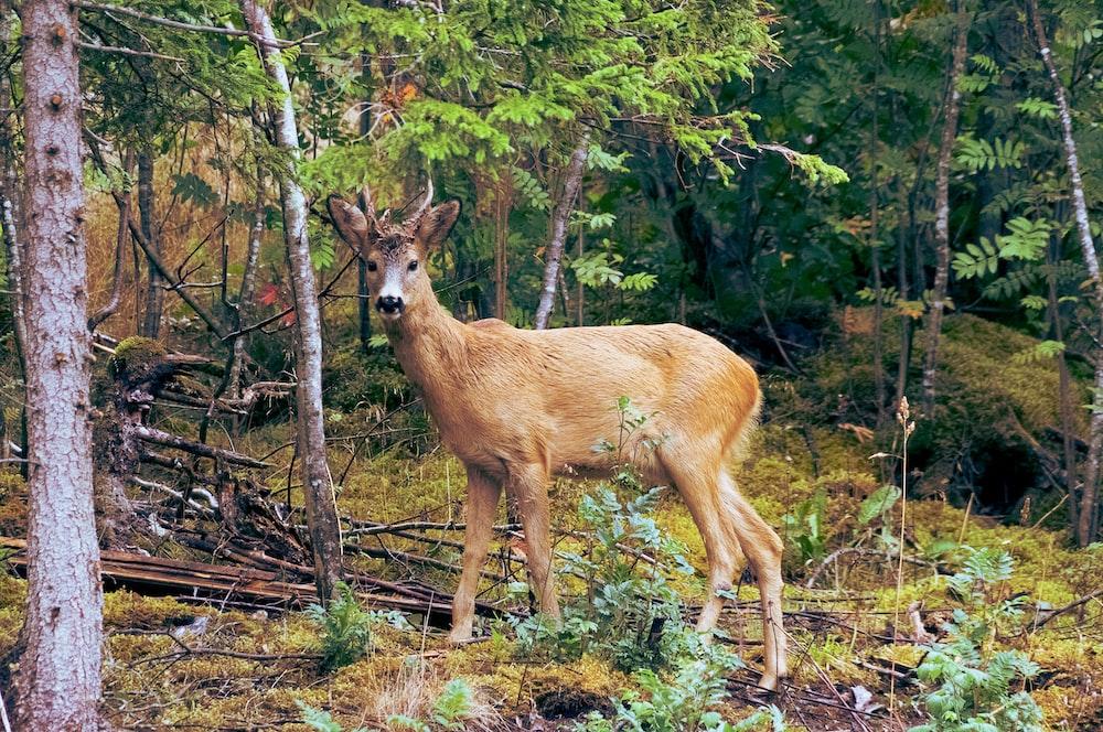 brown deer standing near trees during daytime