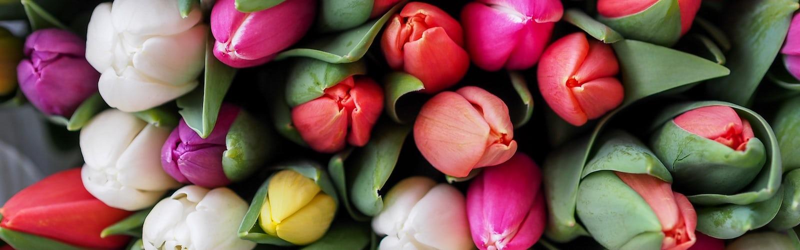 bg image