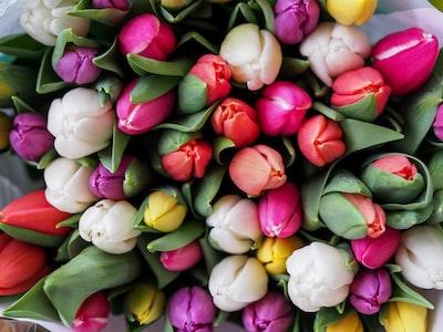 tulip-bouquet-vienna