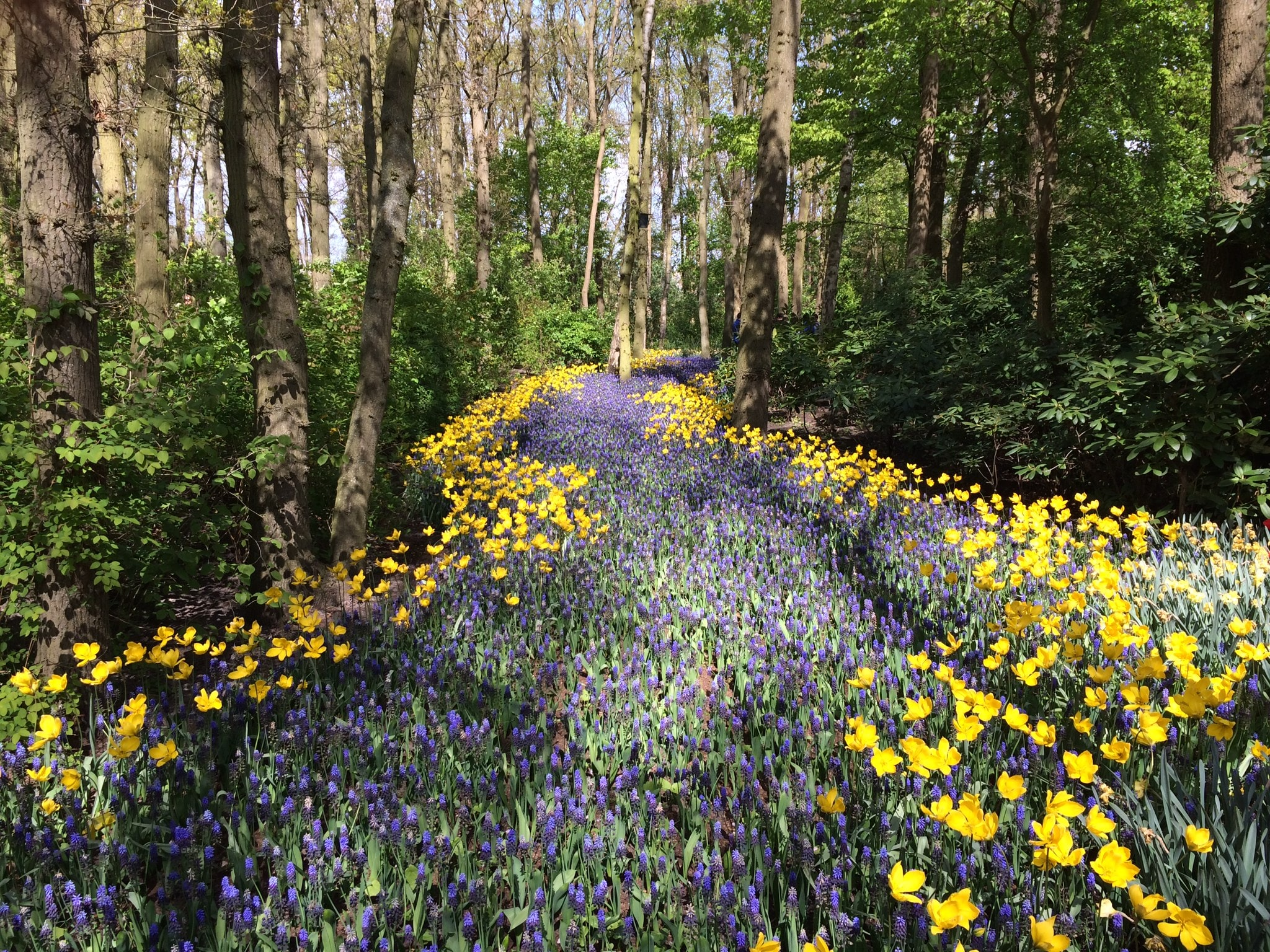 Violet and yellow flowers covering a trail through a forest