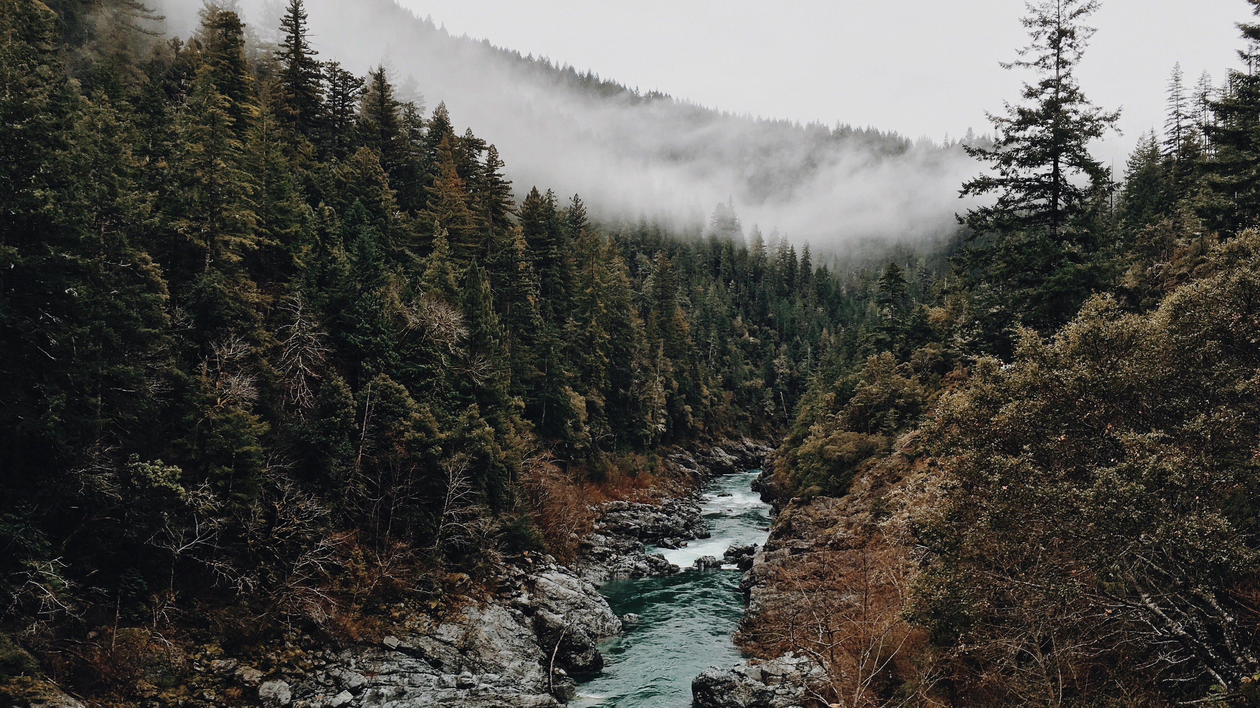 A clear stream on a rocky bed in a foggy forest