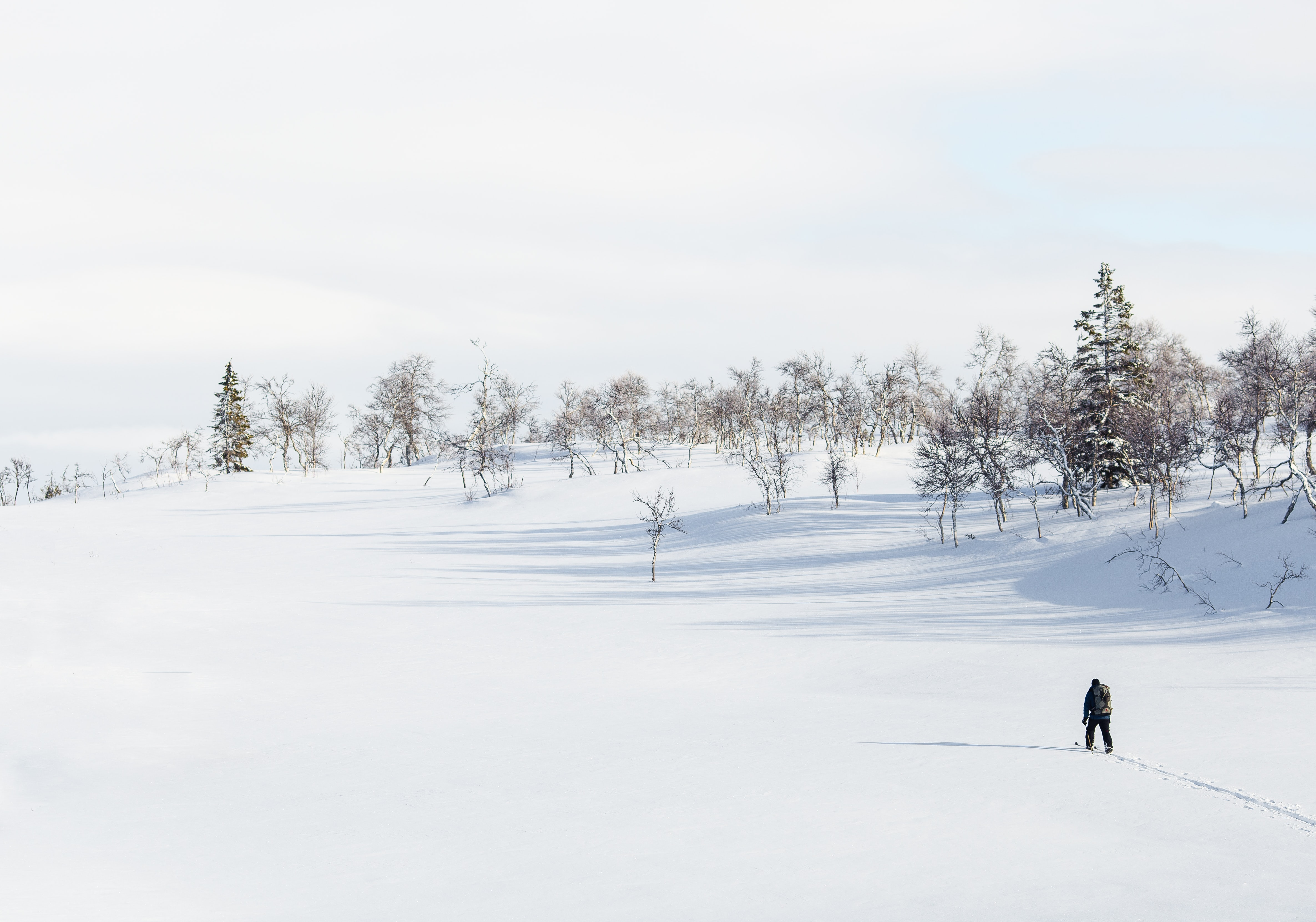 A person hiking in the snow with trees in the pale background