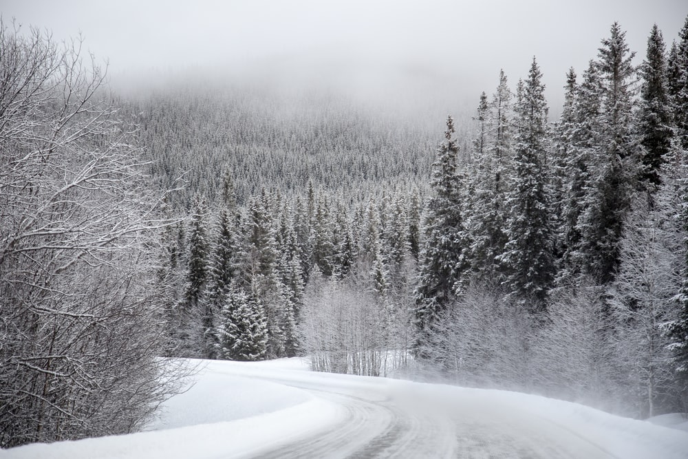 trees covered with snow under gray sky