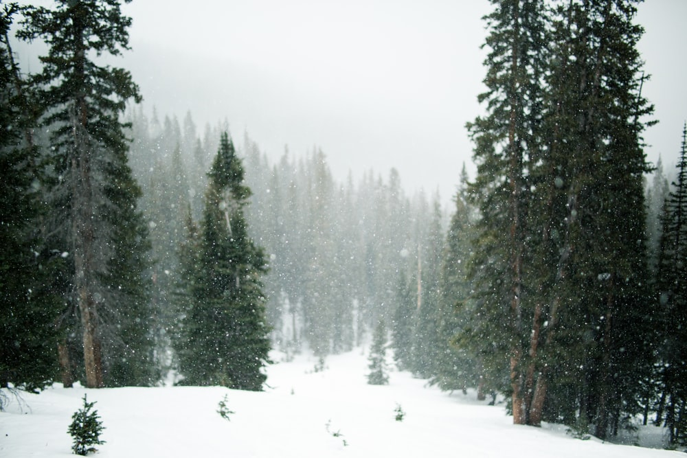 forest during winter