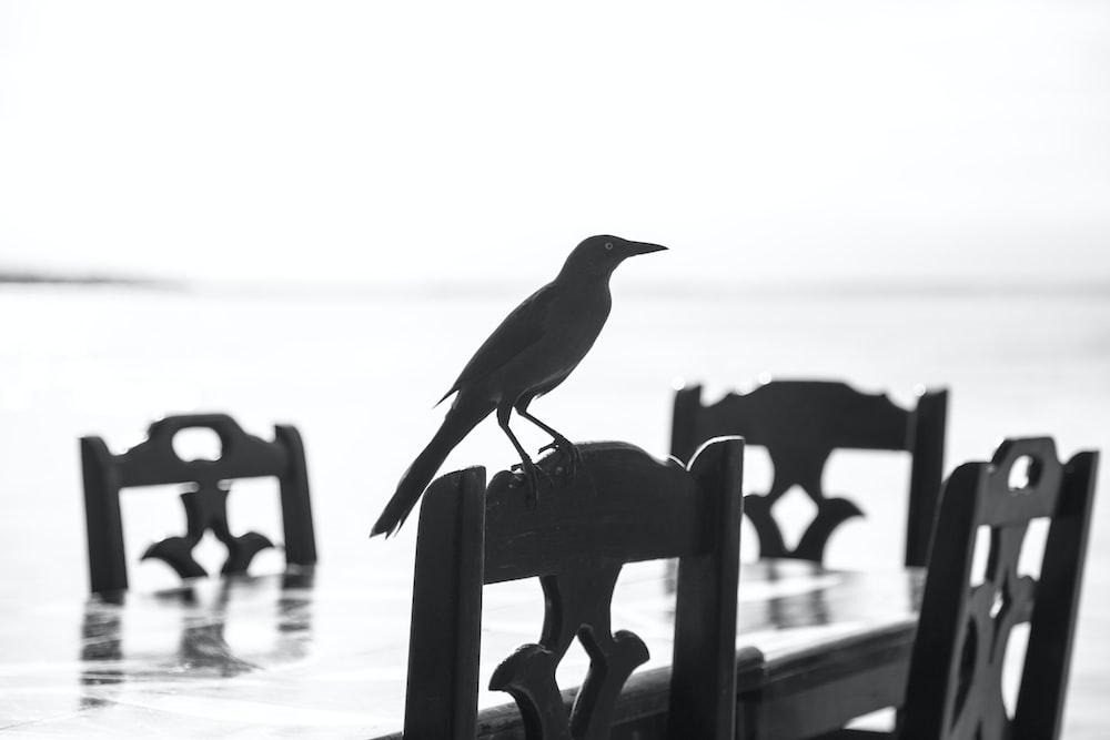 black bird on brown wooden bench
