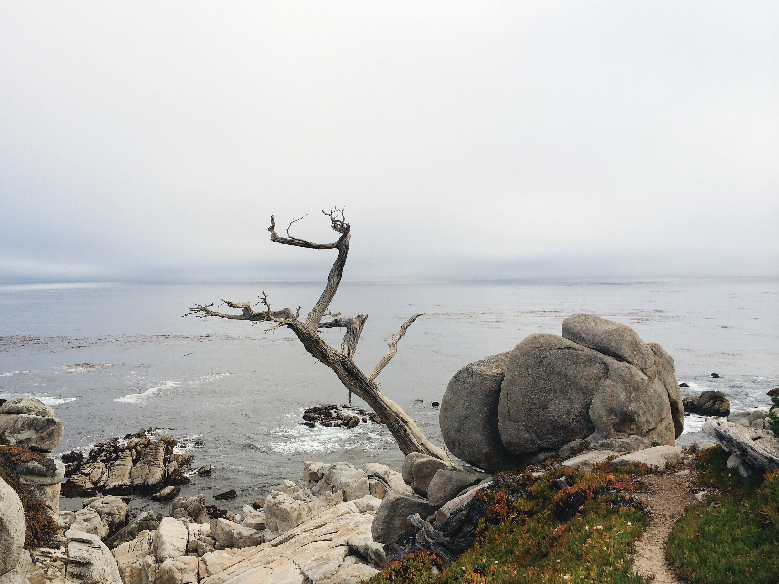 A dead tree jutting out from rocks on the seashore