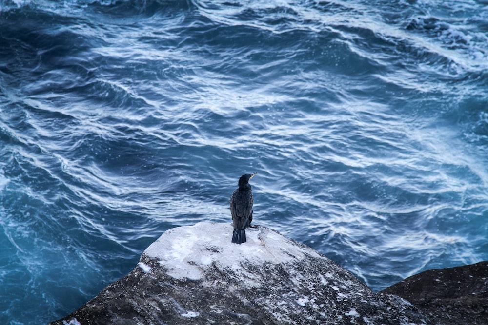 bird standing on rock shore above body of water