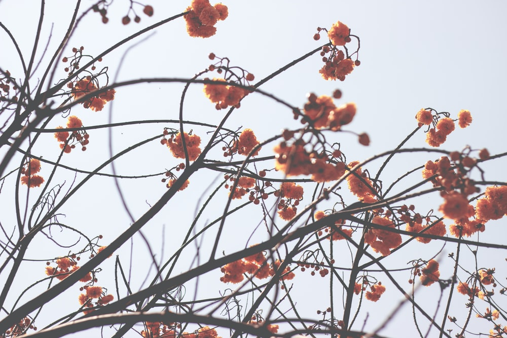 photo of orange petaled flowers