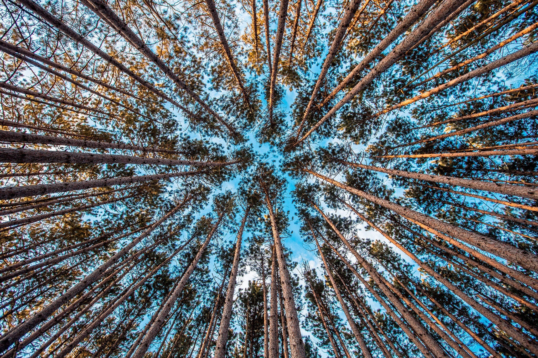 A low-angle shot of a tree canopy against a blue sky