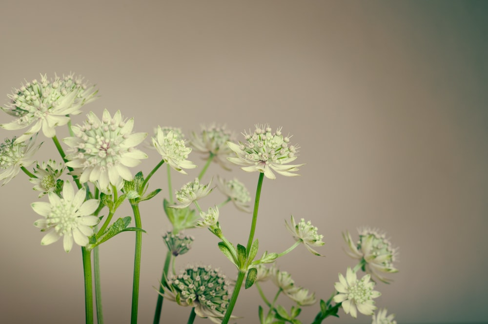 white flowers and green stems