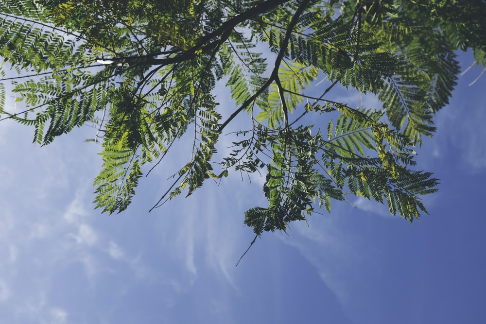 green leafed trees under blue sky