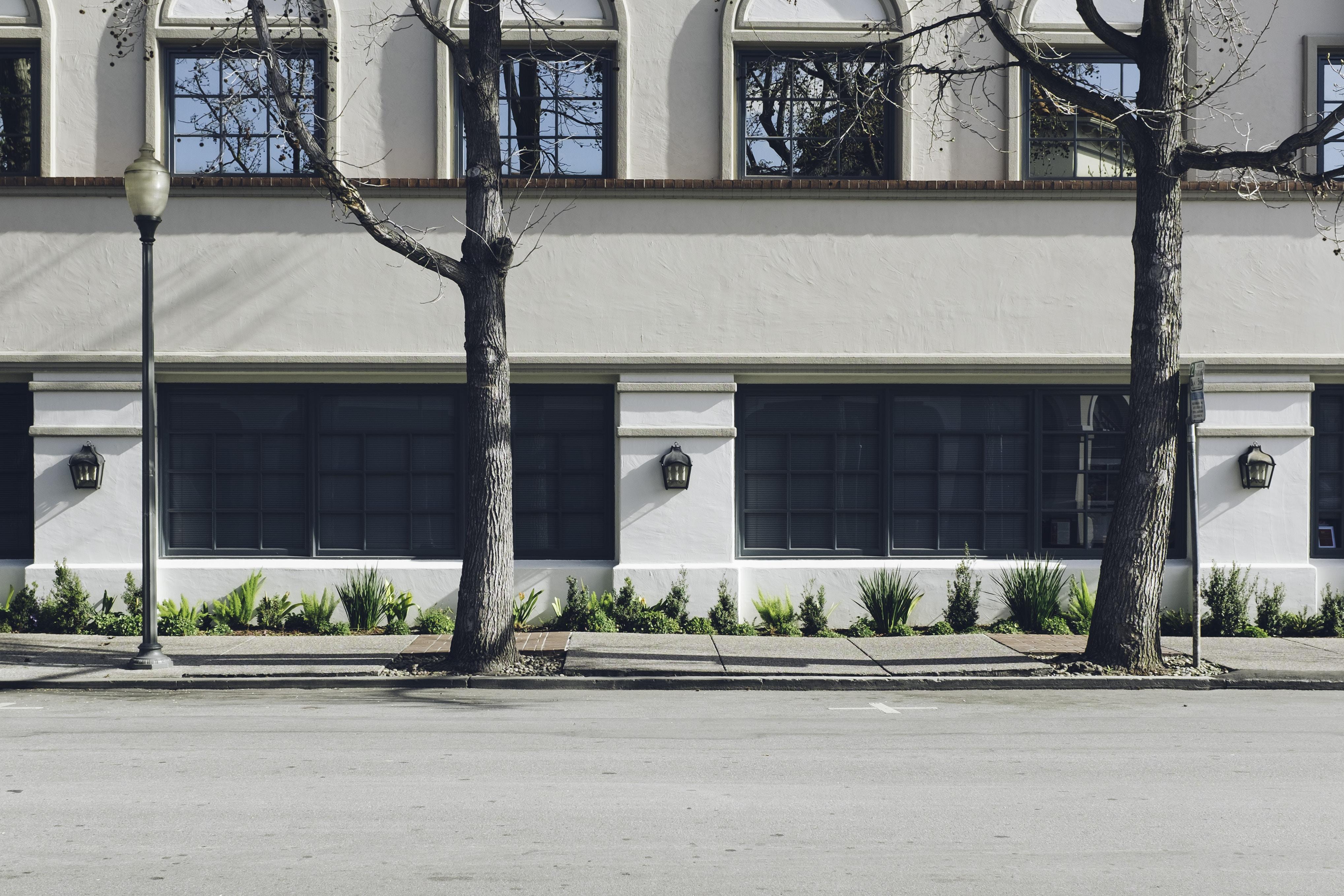 two bare trees near white concrete building