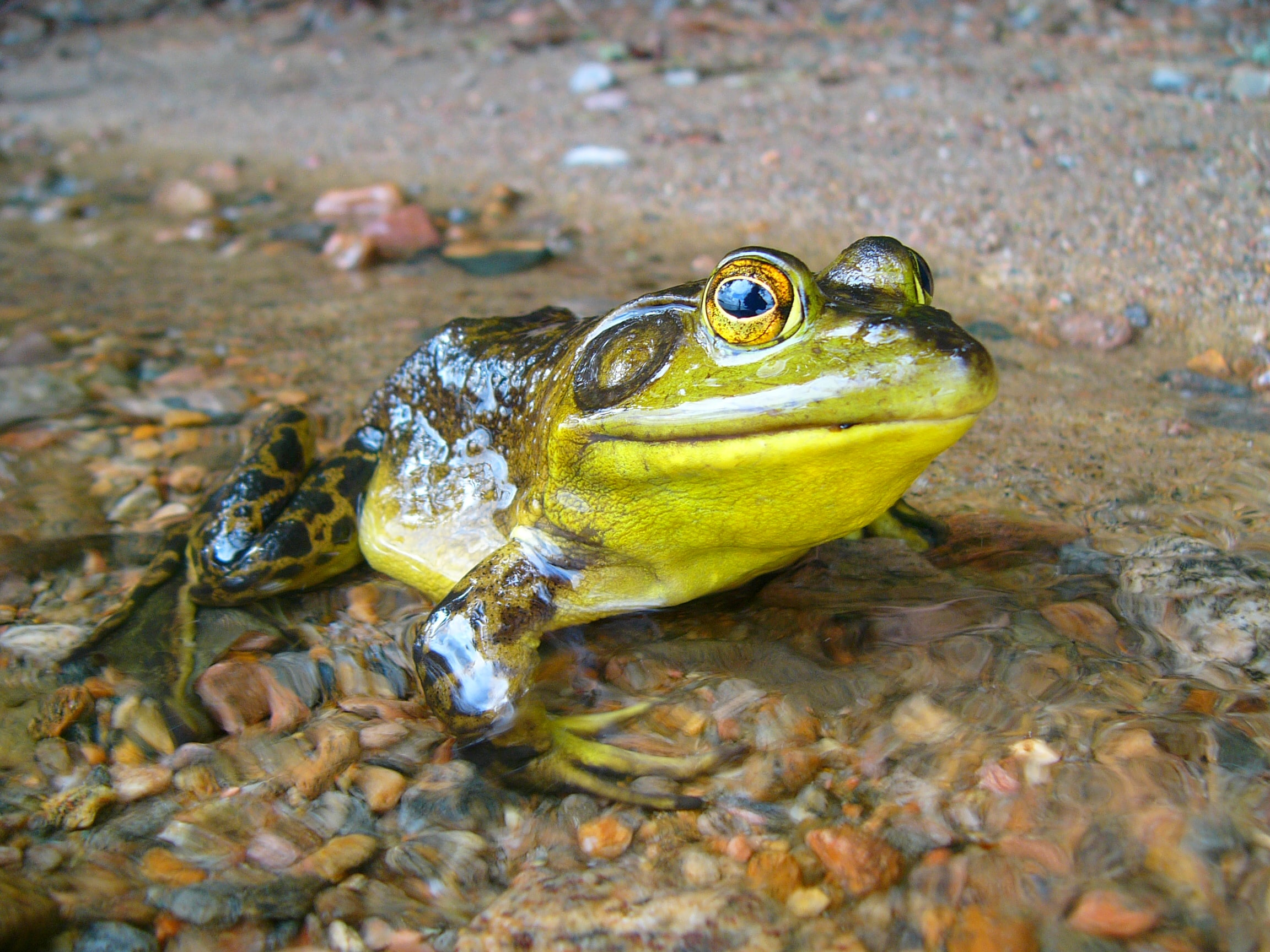 Portrait of a frog on the water shore
