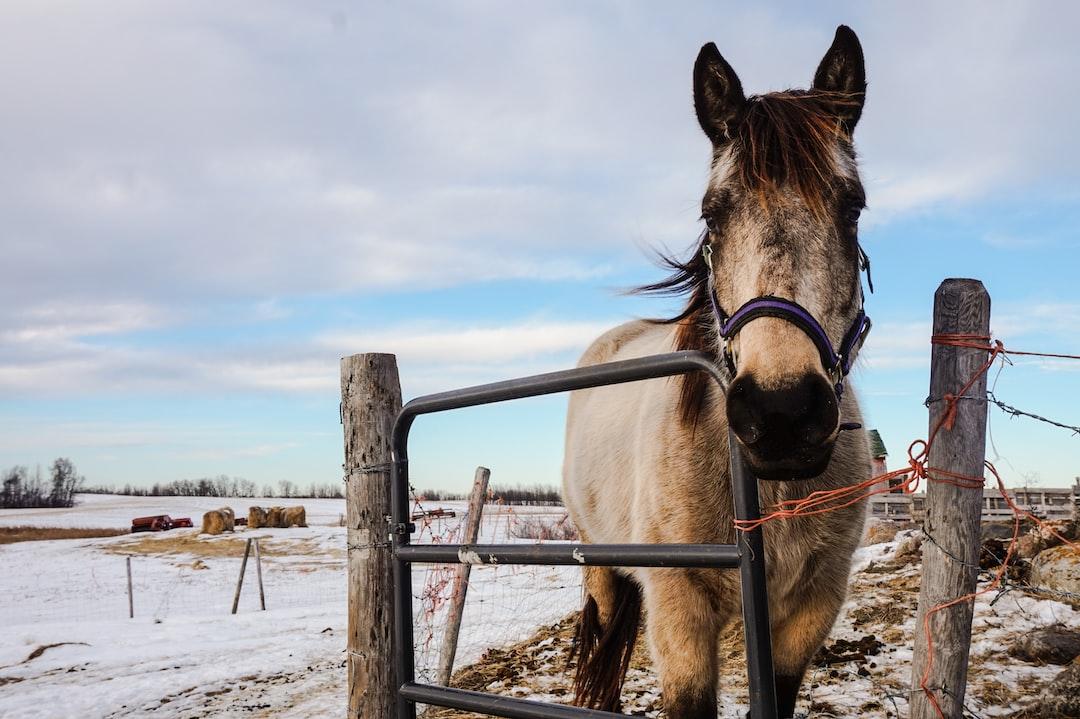 Gray horse in a snowy enclosure