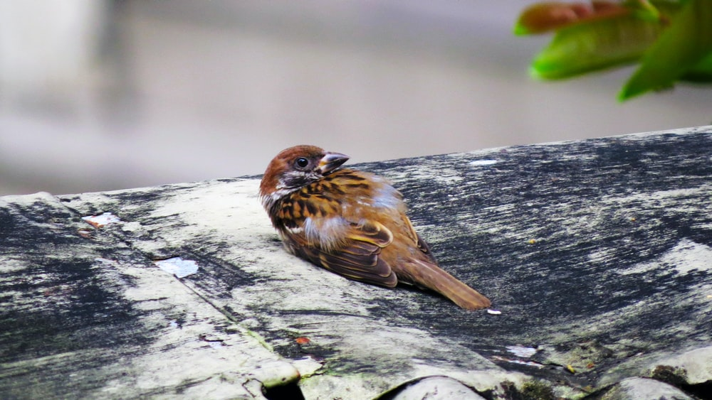 brown sparrow bird on gray and black tree