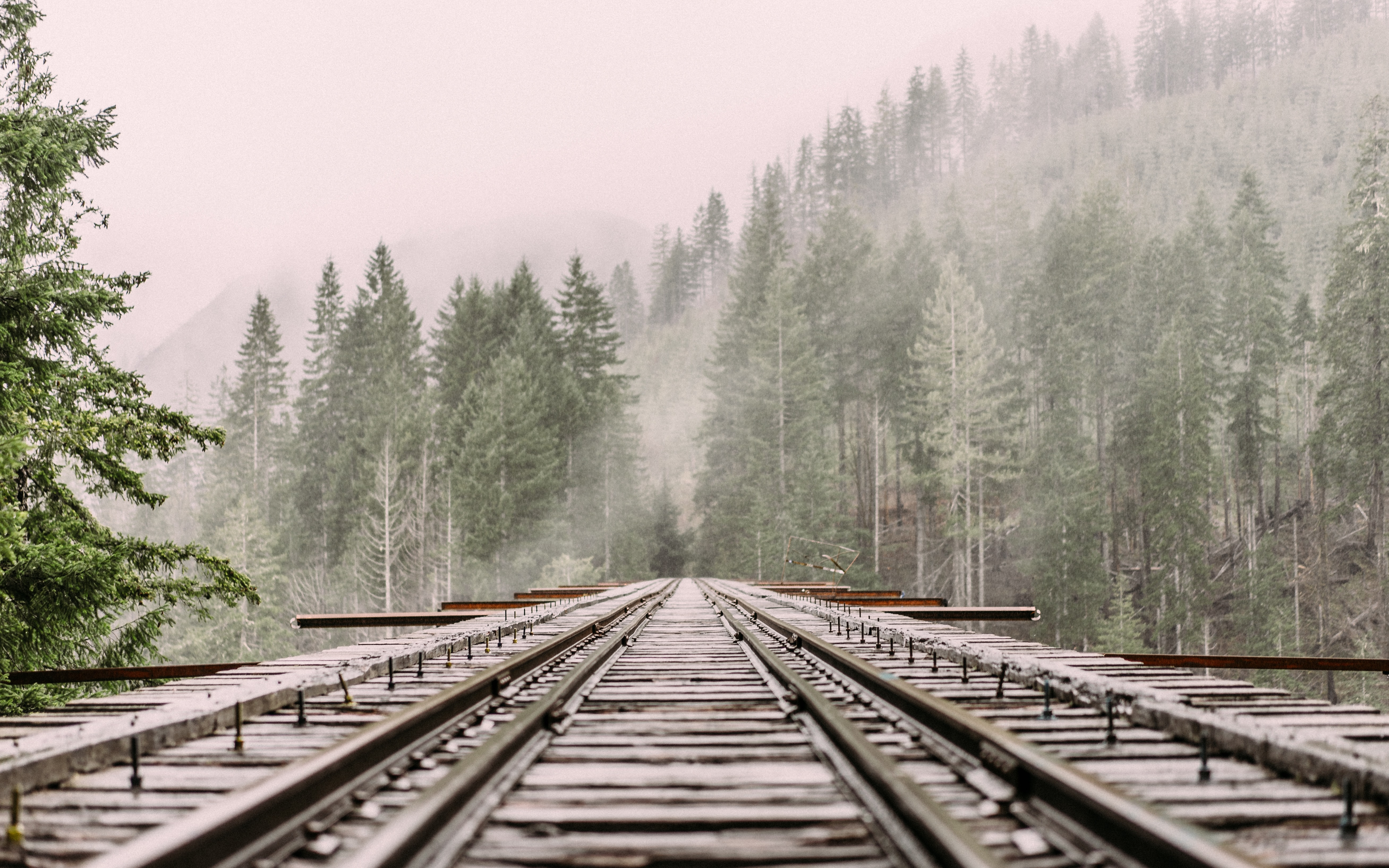 A low shot of a railroad track leading into a coniferous forest