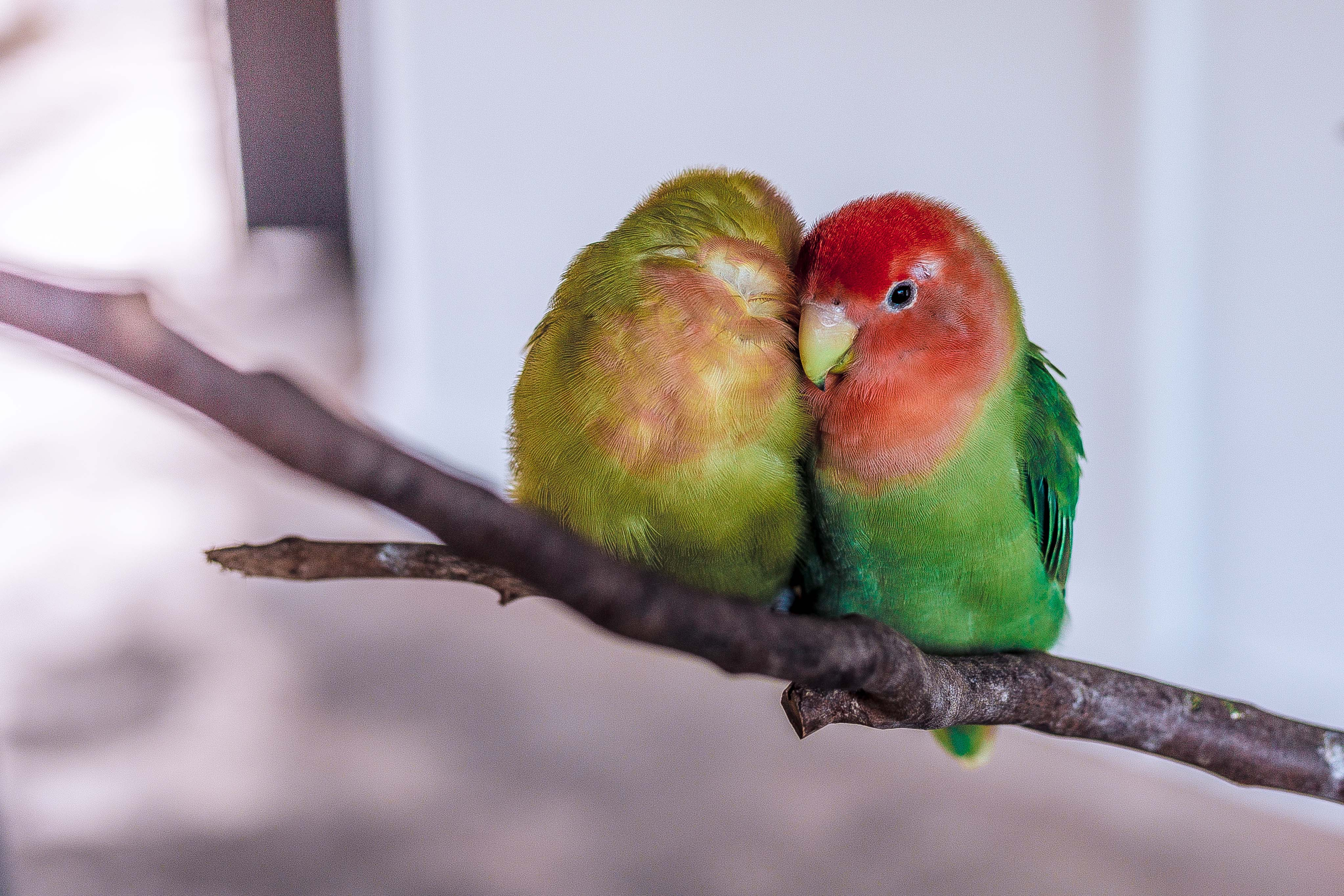 two green-and-red birds