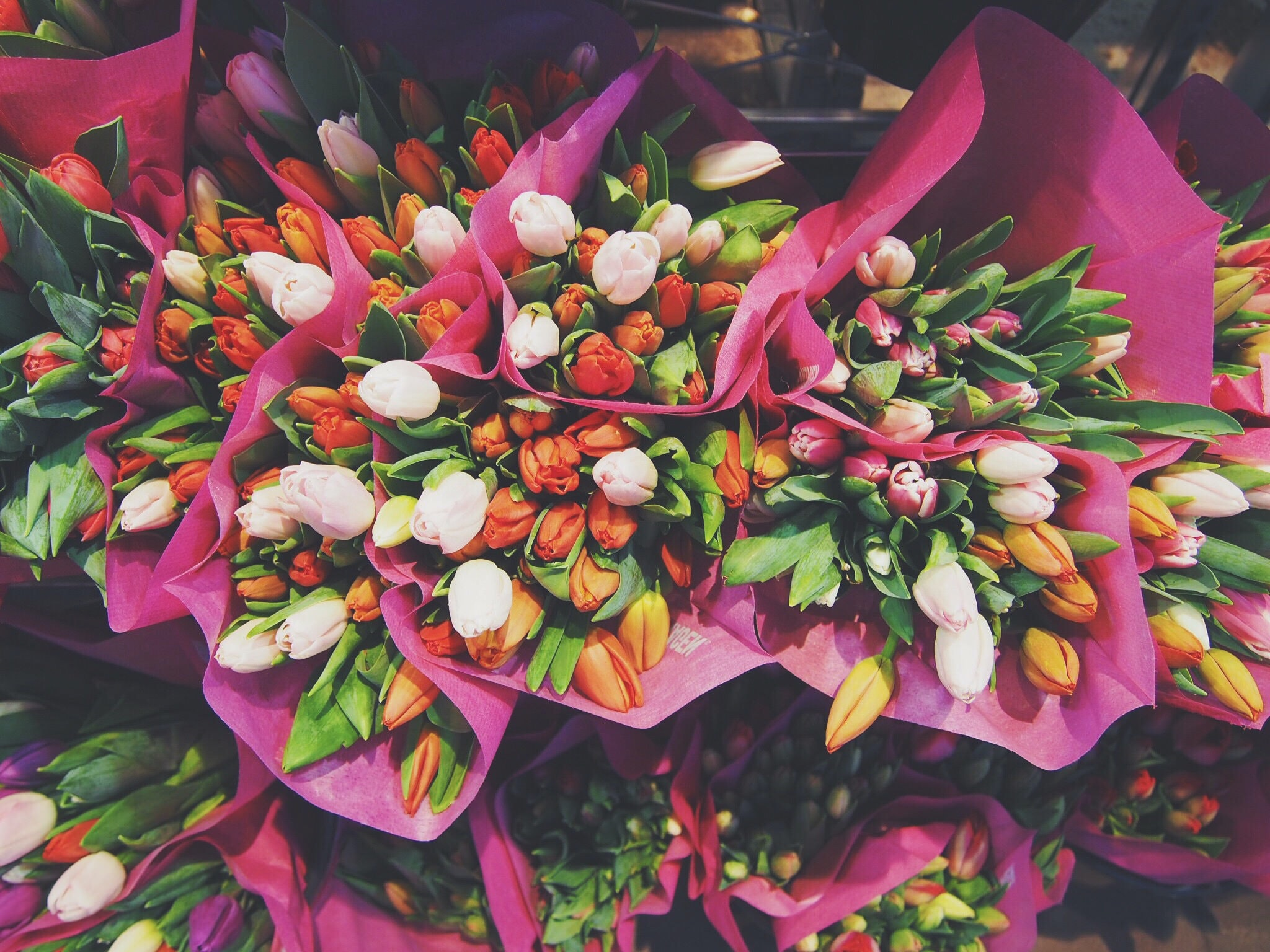 Colorful bouquets of tulips with pretty petals in flower stand in Spring, Bergen