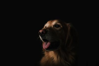 4442. Kutya