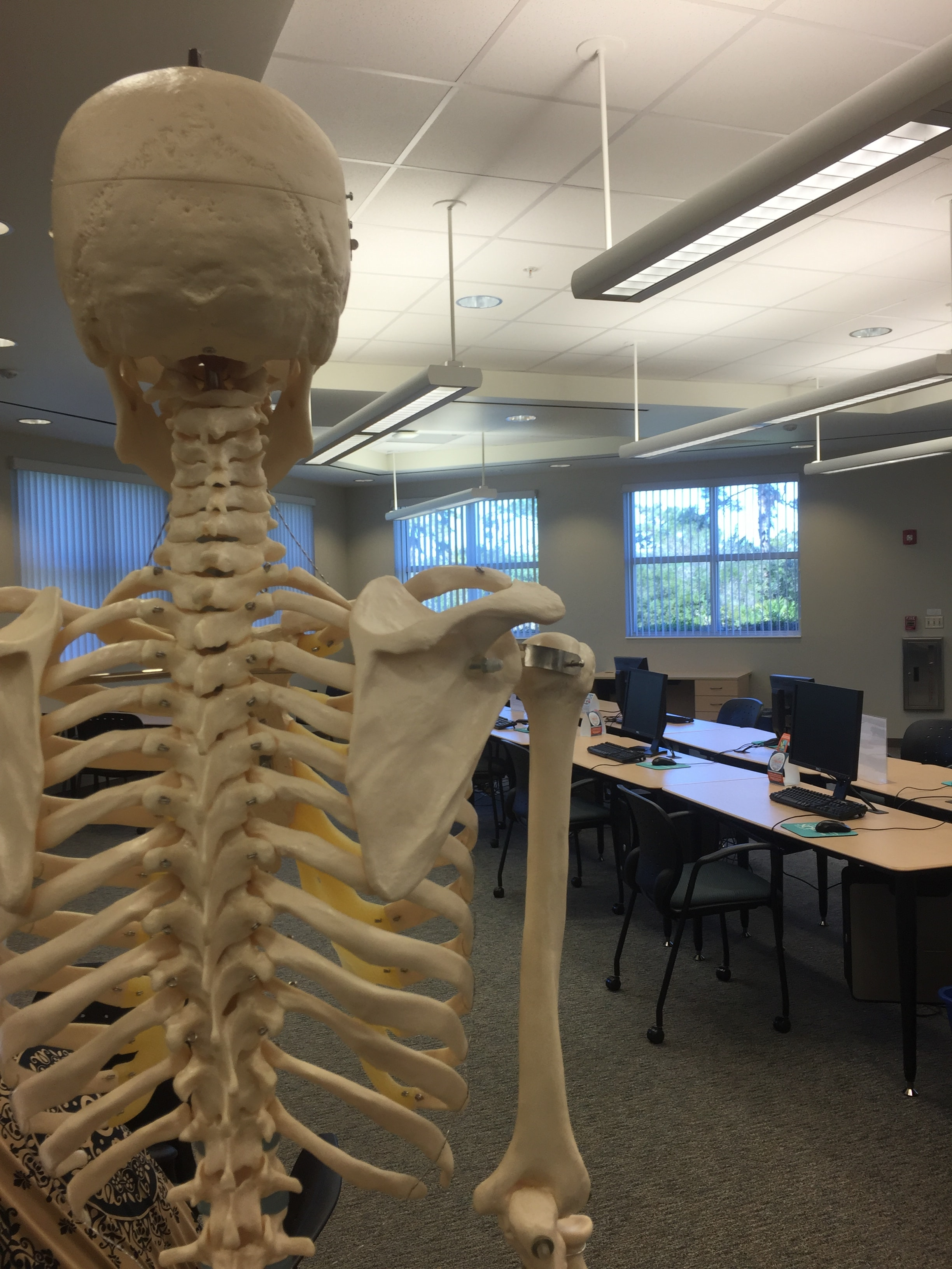 A skeleton in a classroom.