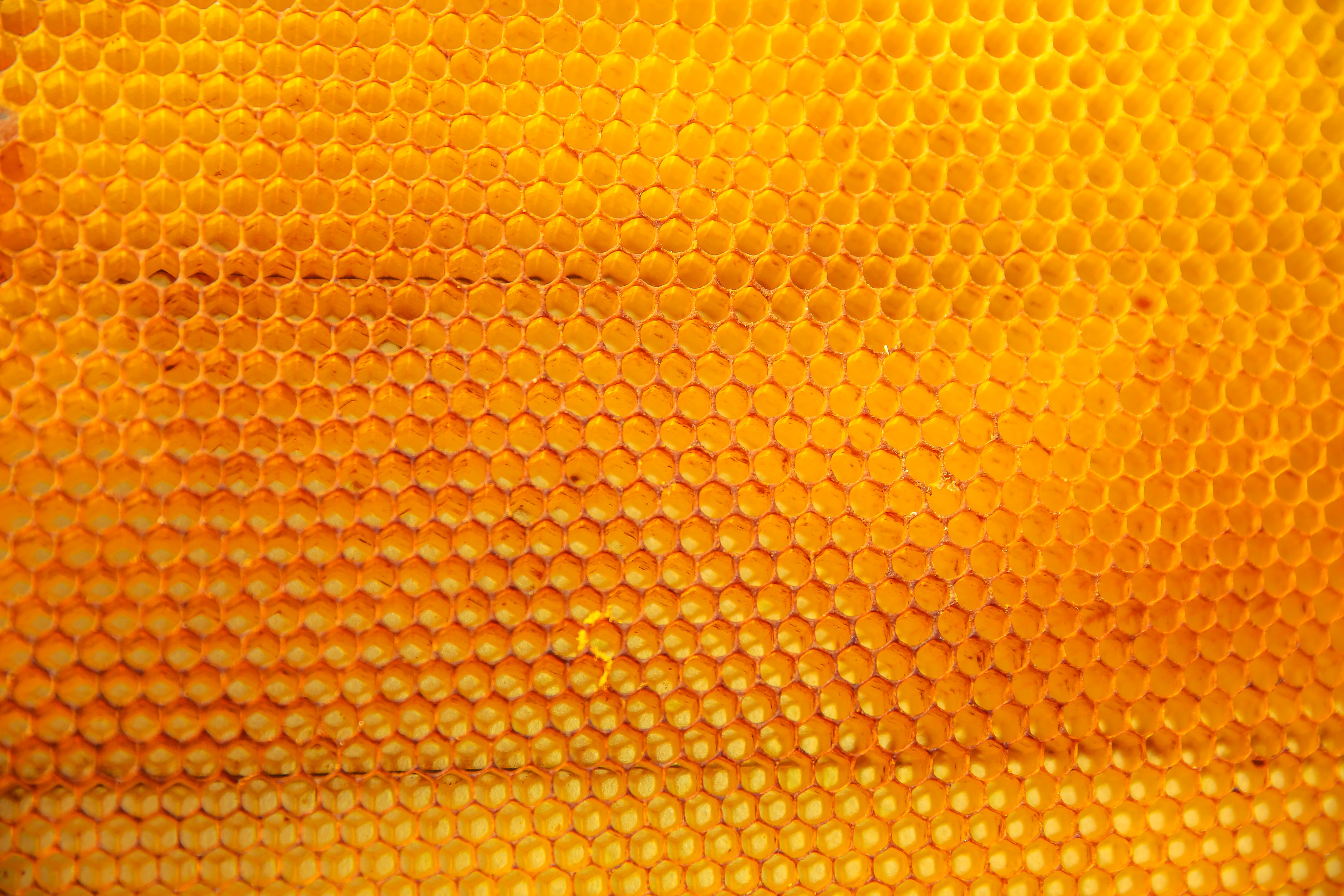 A yellow bubble texture pattern.