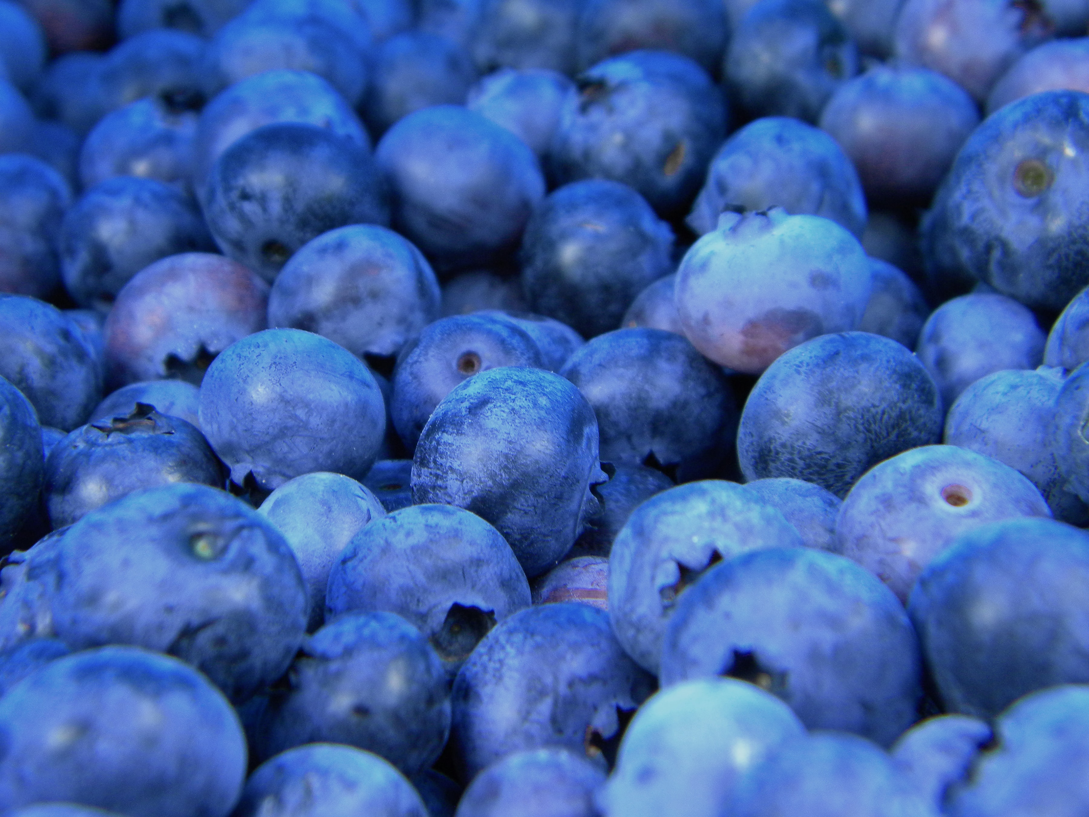 Macro shot of fresh blueberries
