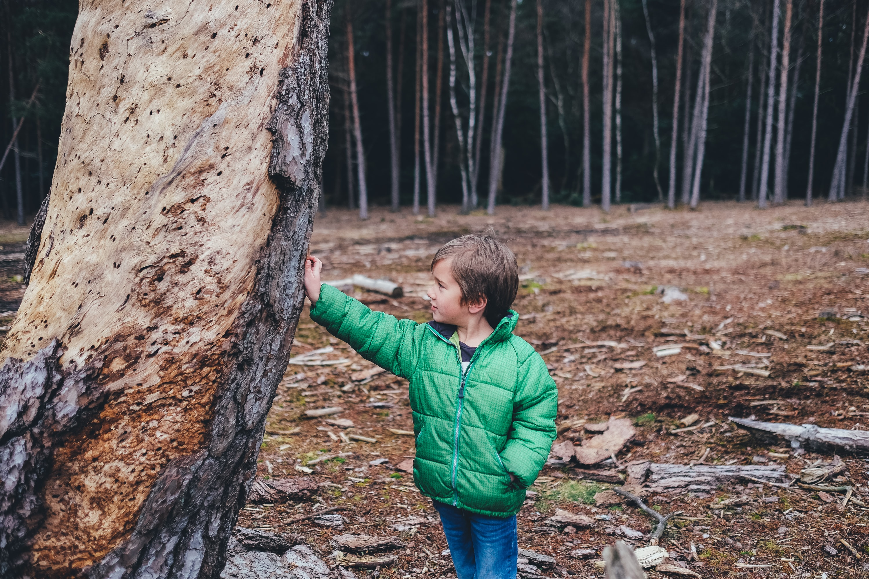 A small boy in a jacket leaning against a tree in a forest