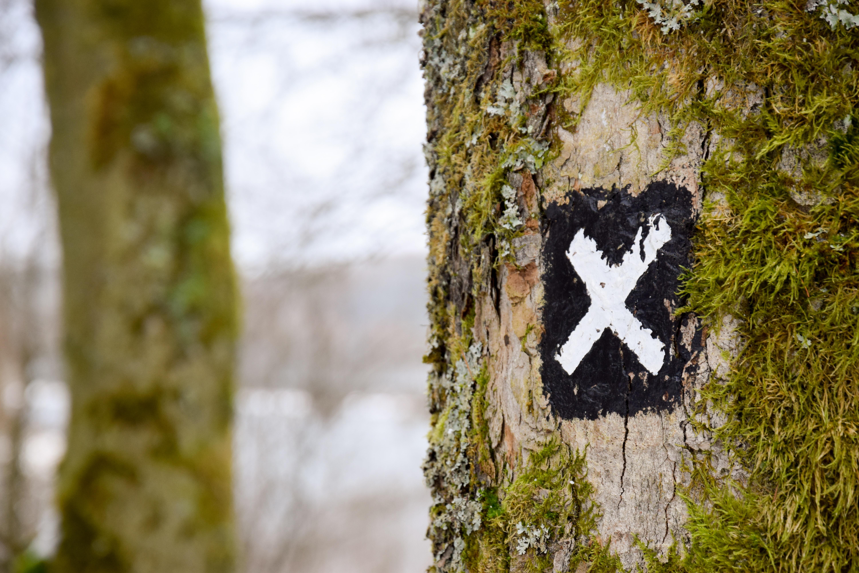 selective focus photography of X logo