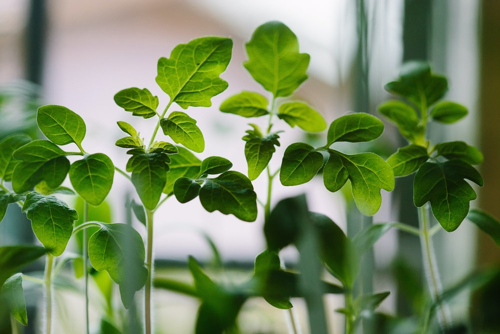 selected focus photo of green leaf plants