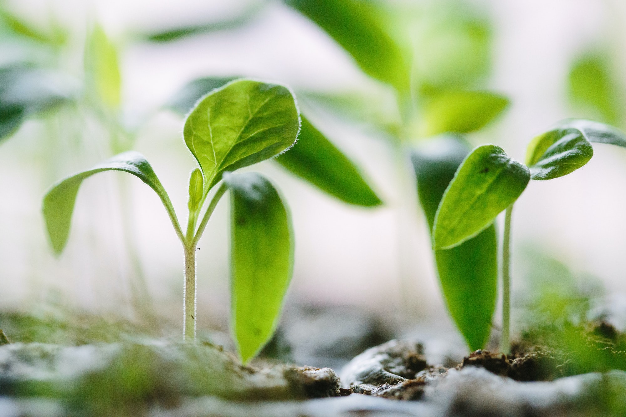 3 Truths to Grow Your Leadership For the Long Term