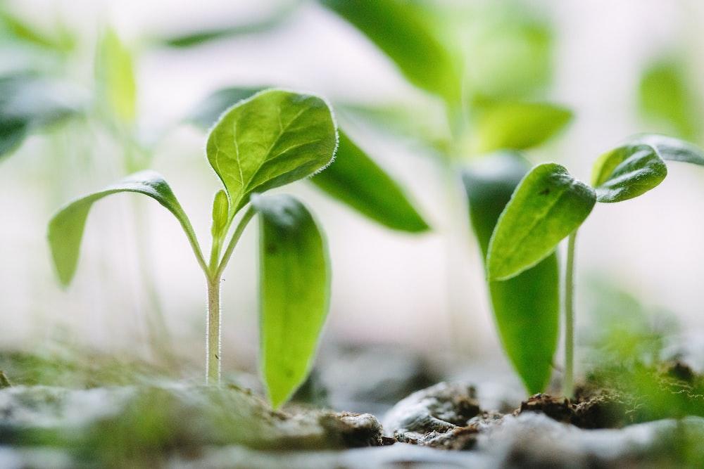 green plants on soil