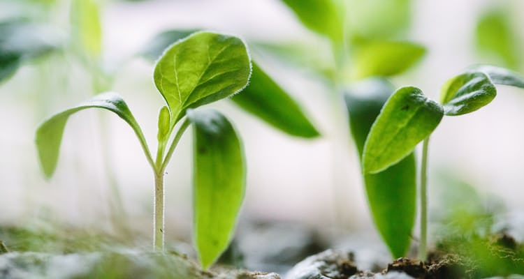 5 pathways for re-energising your business' growth