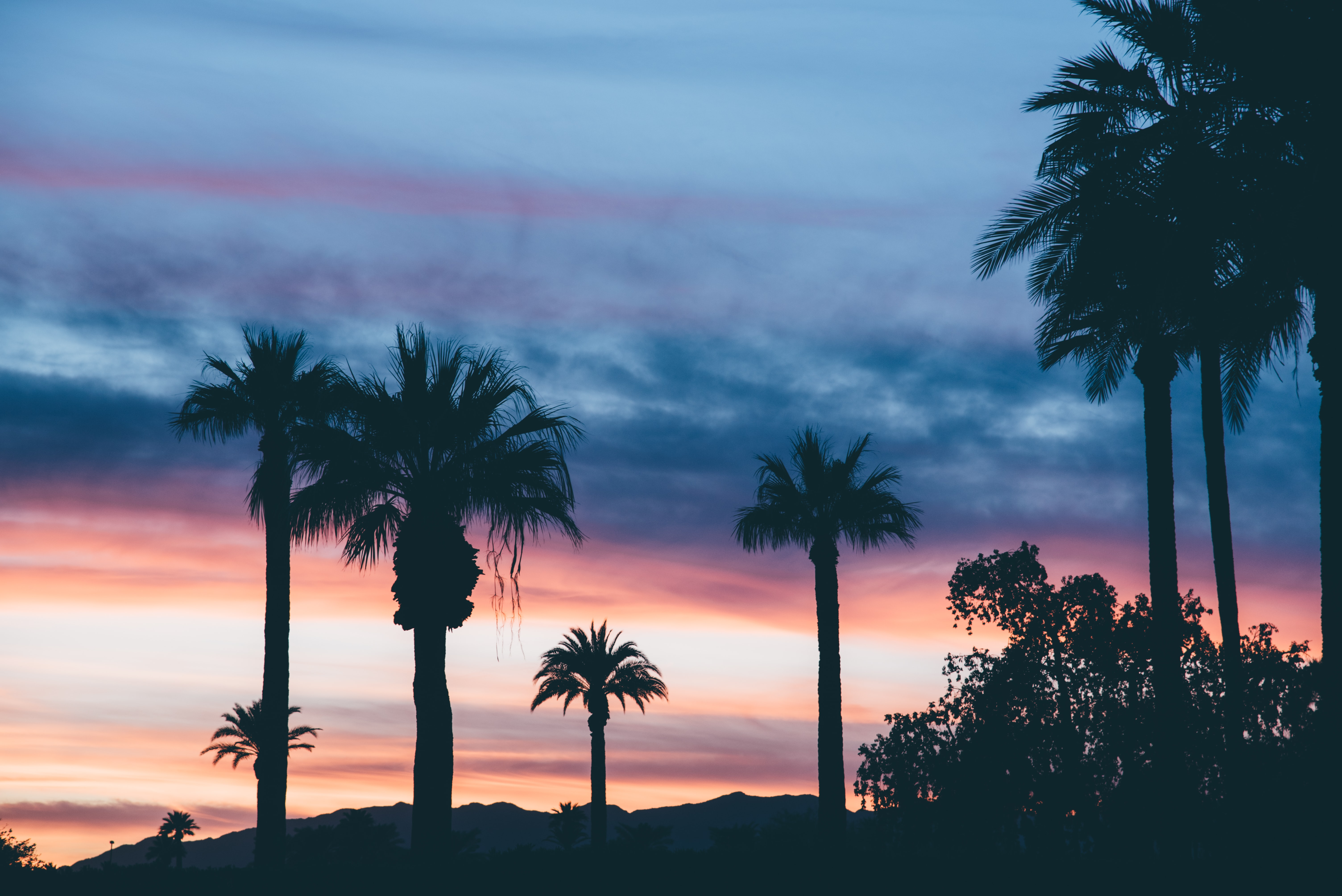 Landscape Supply Co >> Sunset, palm tree, tree and cloud HD photo by Jordan Whitt (@jwwhitt) on Unsplash