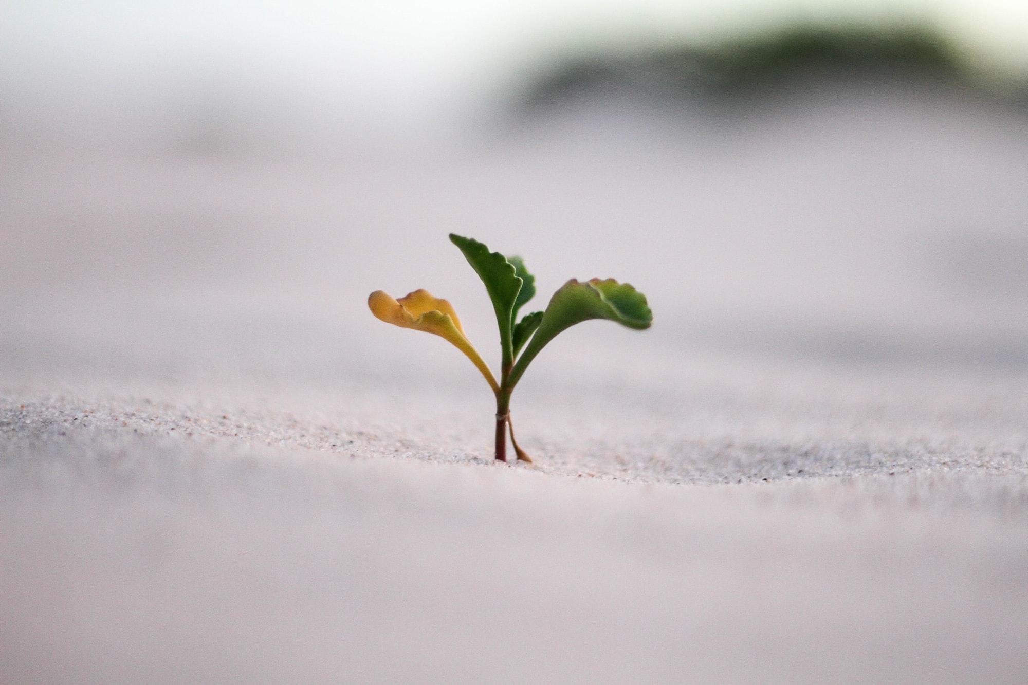 협력과 성장 : 조직은 인재를 모셔오기 전에 어떤 준비를 해야 하는가