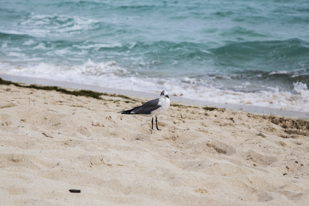 white and gray bird on beach shore during daytime