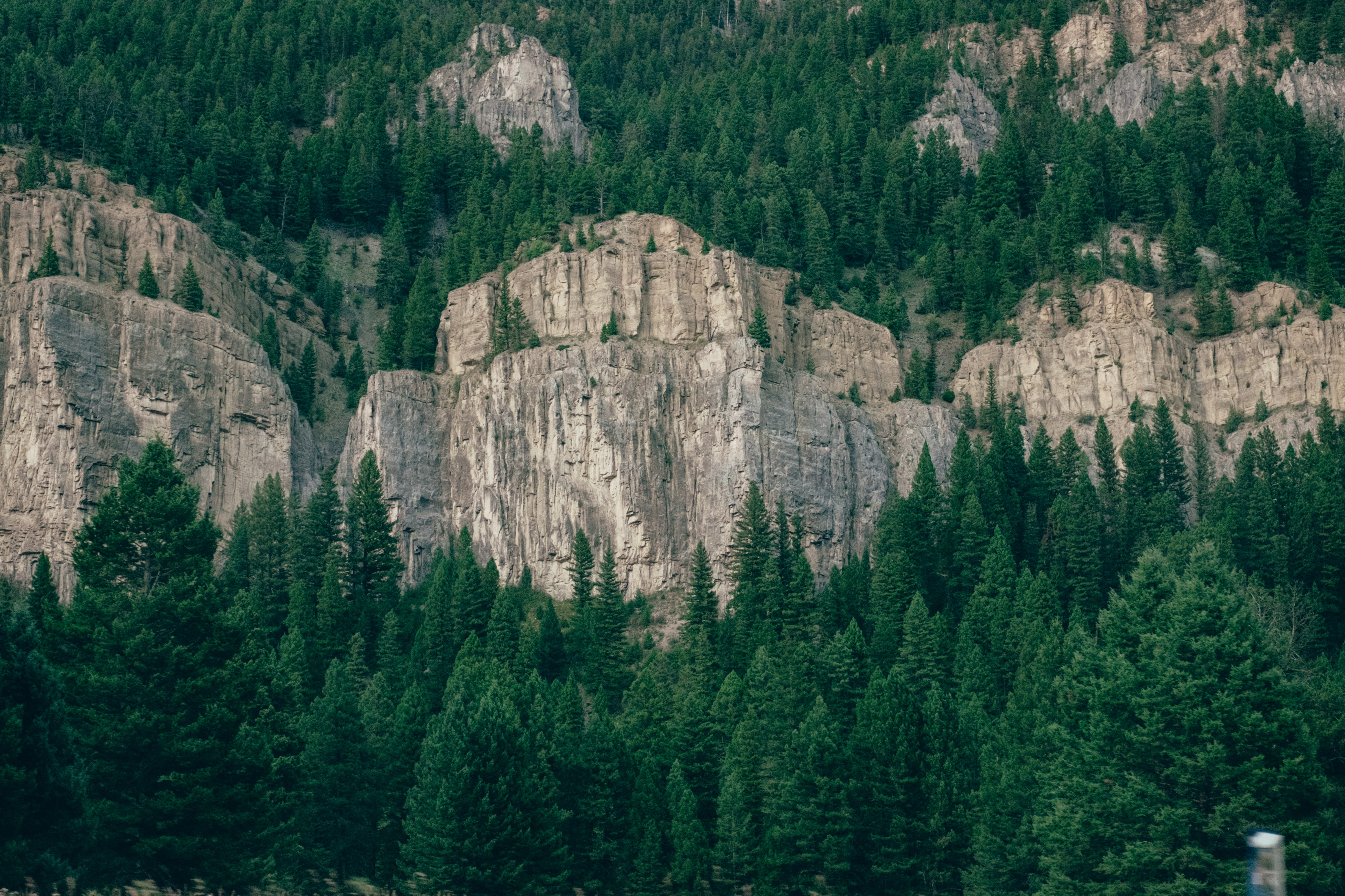 Coniferous trees on jagged rock faces and below them