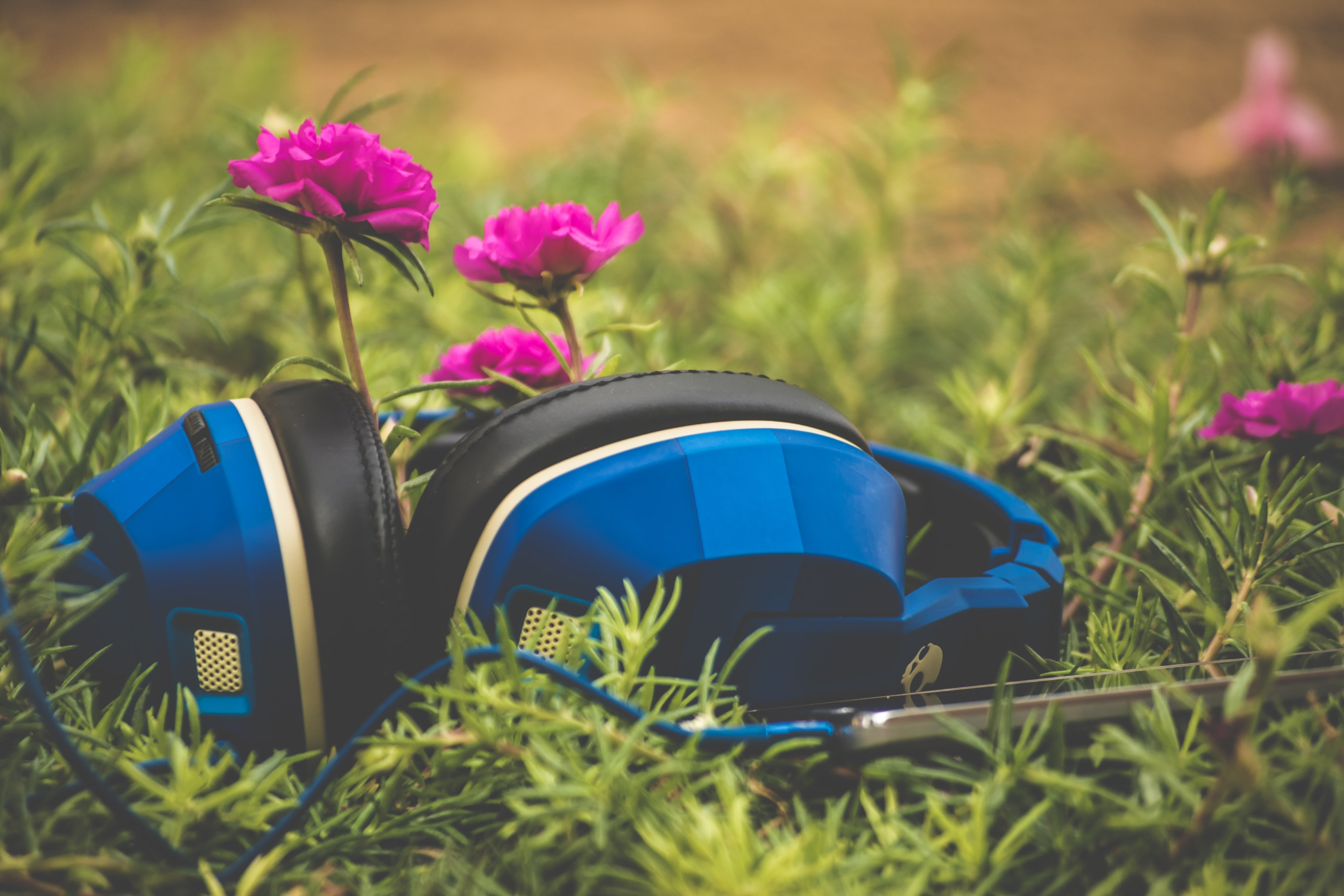 A pair of blue headphones in the grass next to purple flowers