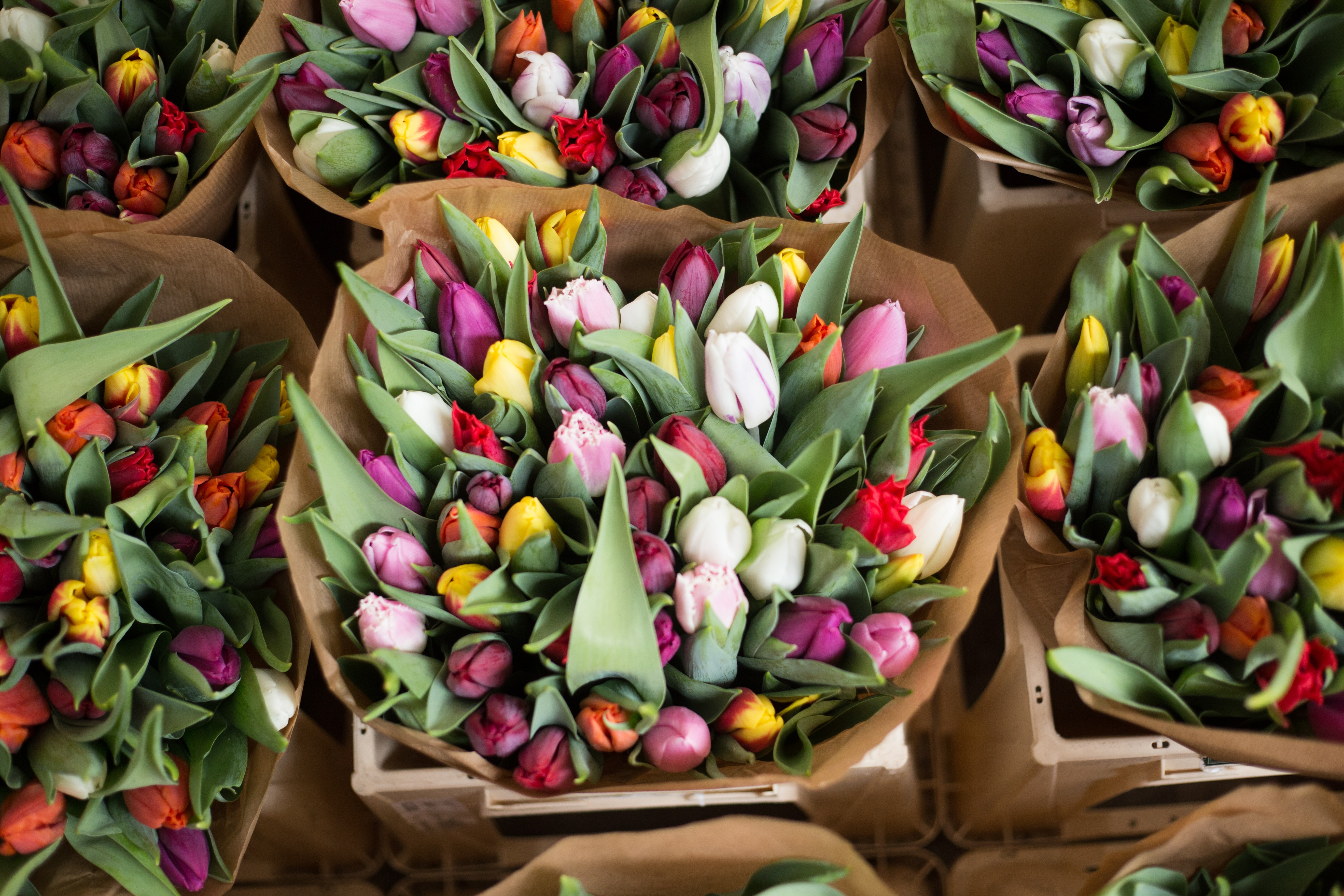 An overhead shot of colorful tulips in bouquets wrapped in brown paper