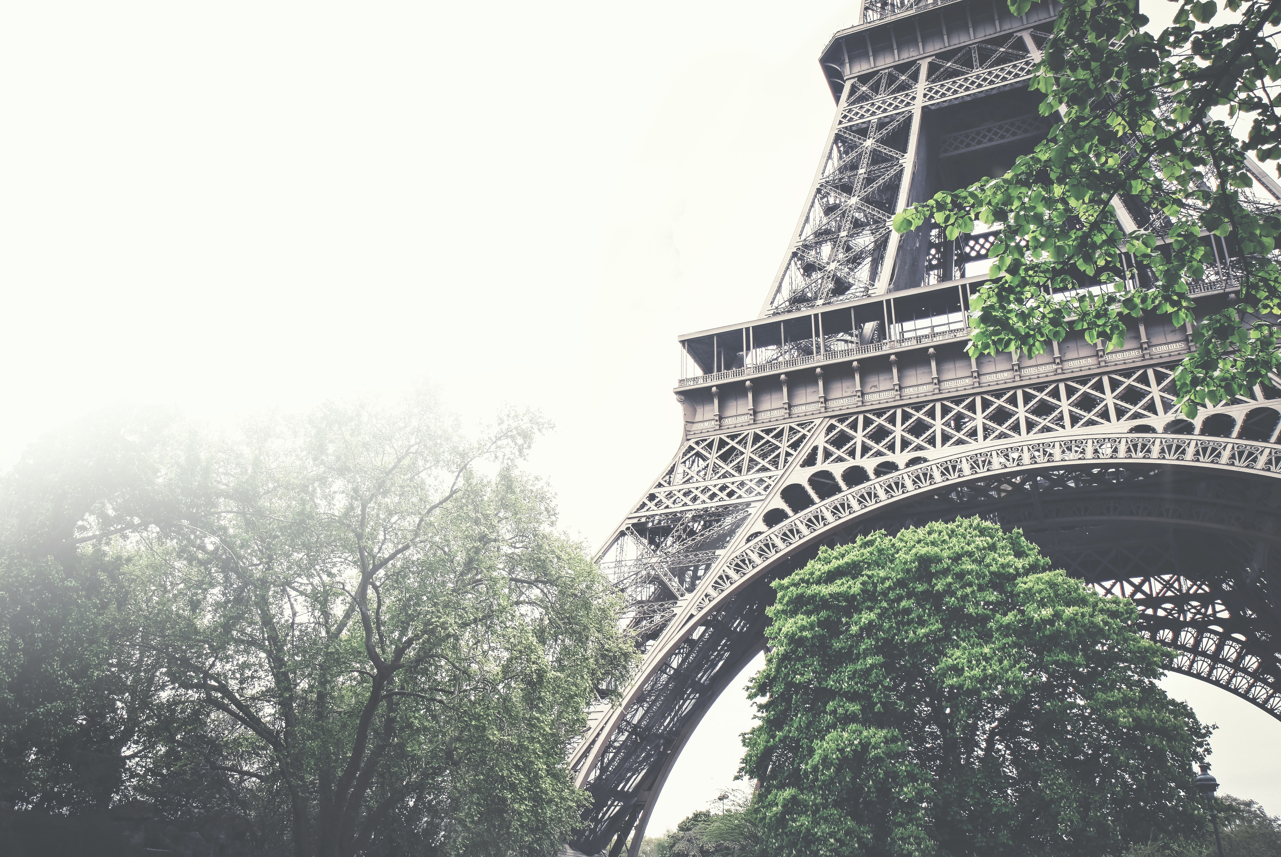 A close-up shot of the Eiffel Tower in Paris with trees surrounding it